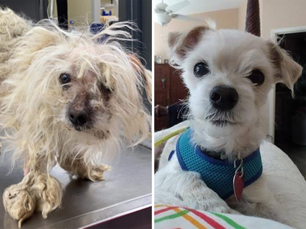 scruffy before and after