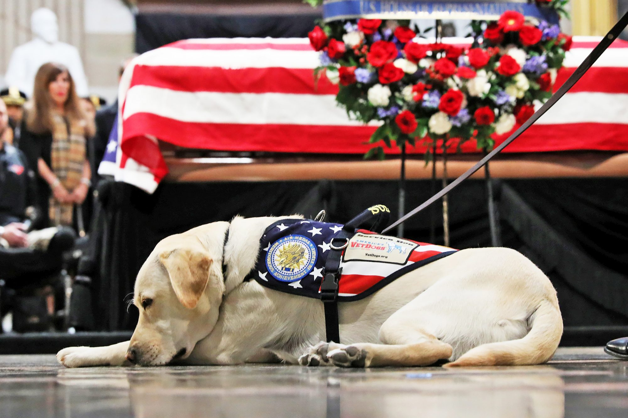 President George H.W. Bush's dog, Sully, lying in front of Bush's casket which is draped with the American flag