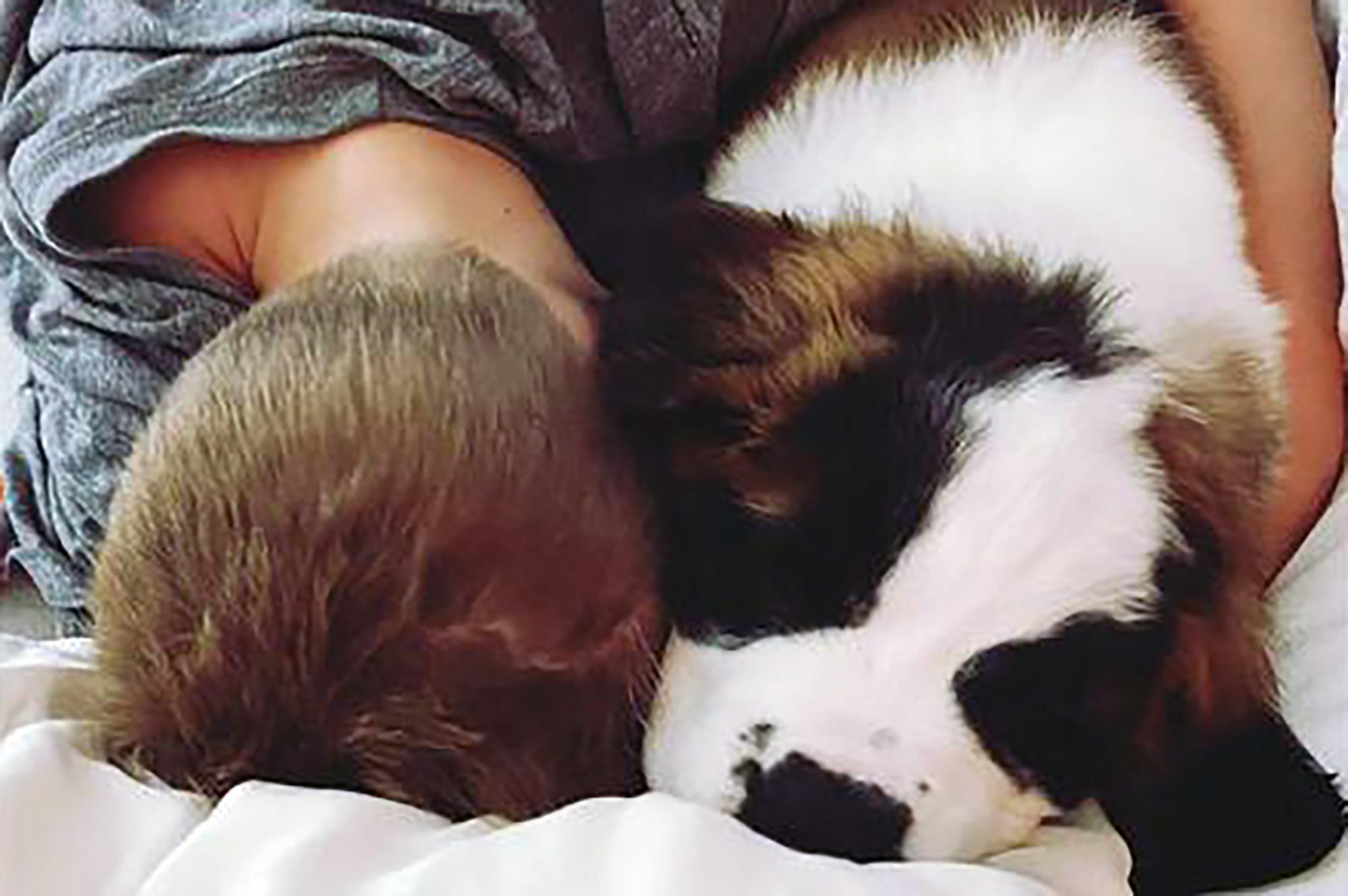 Black and white large dog cuddles with boy