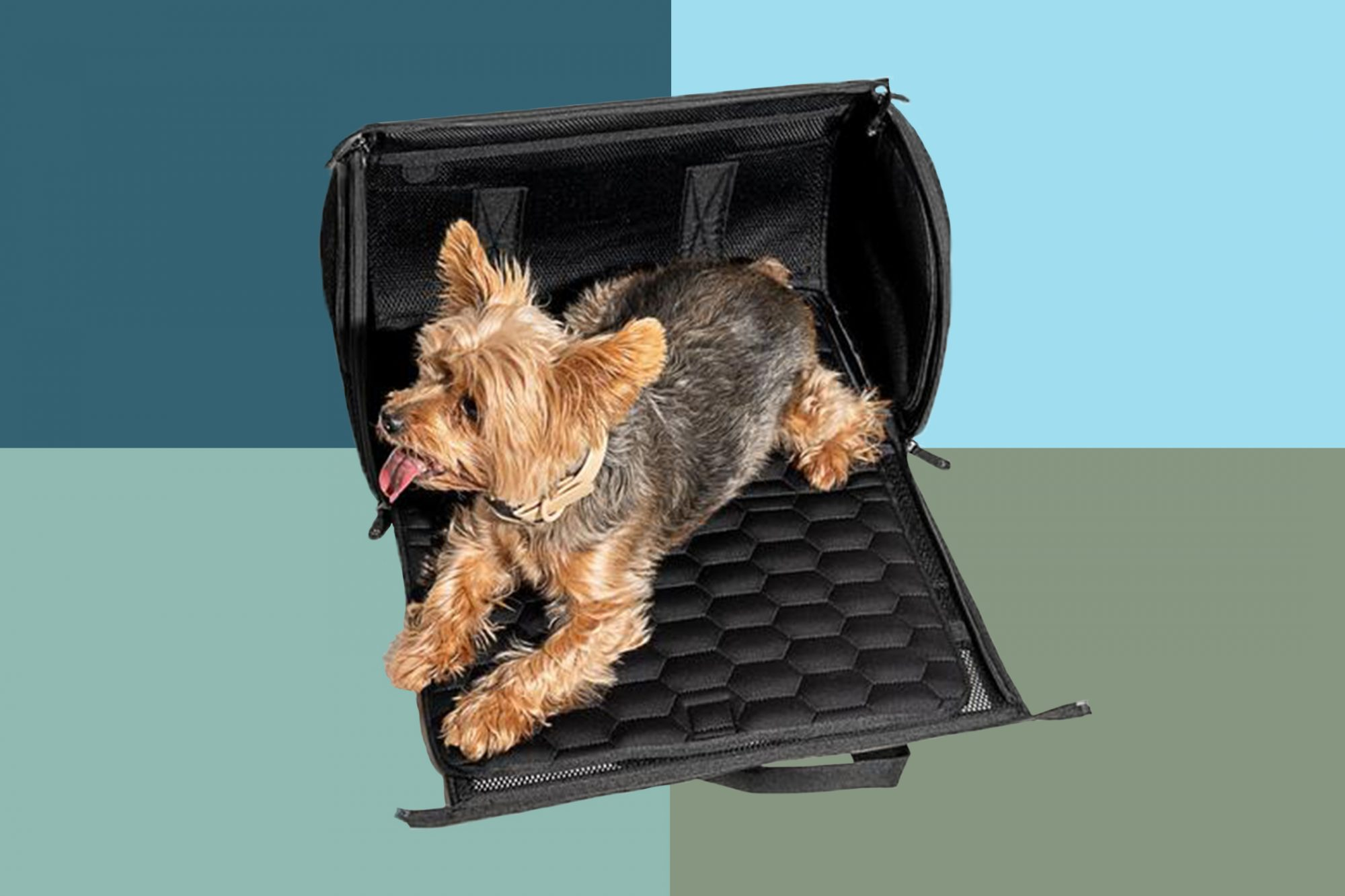 Orange and brown small fluffy dog laws on black portable pet carrier