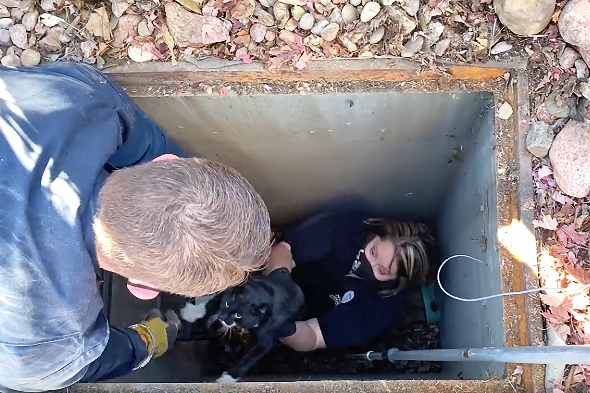 firefighters-rescue-cat-from-sewer