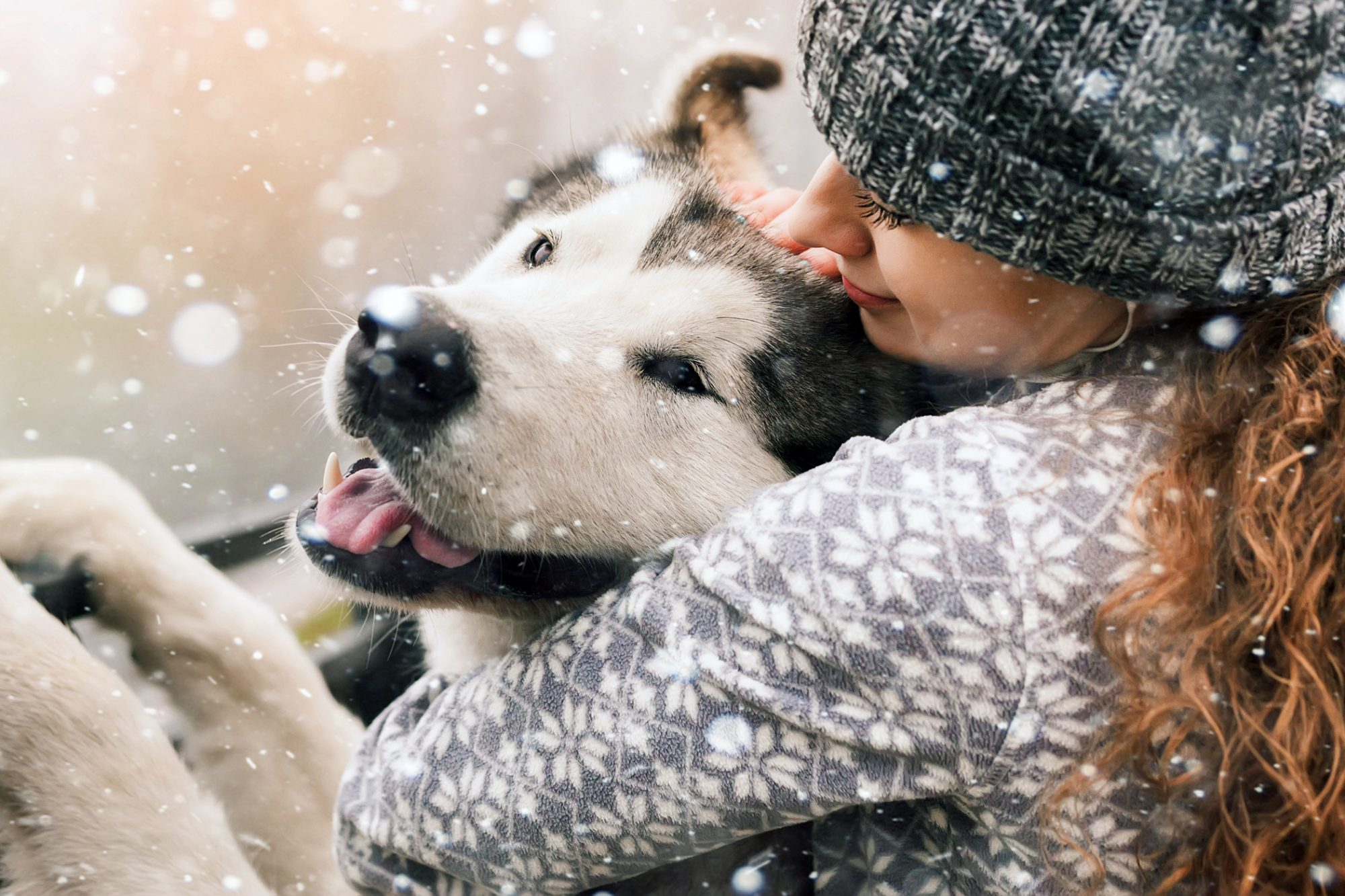 Husky enjoying the snow and a hug from their human