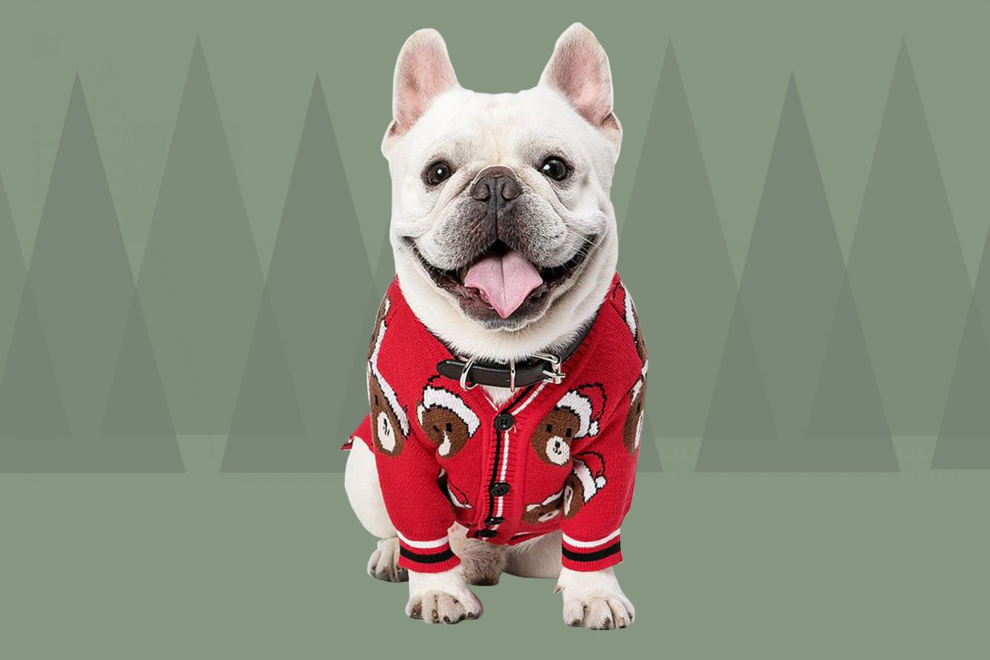 dog in christmas sweater with graphic fir tree background