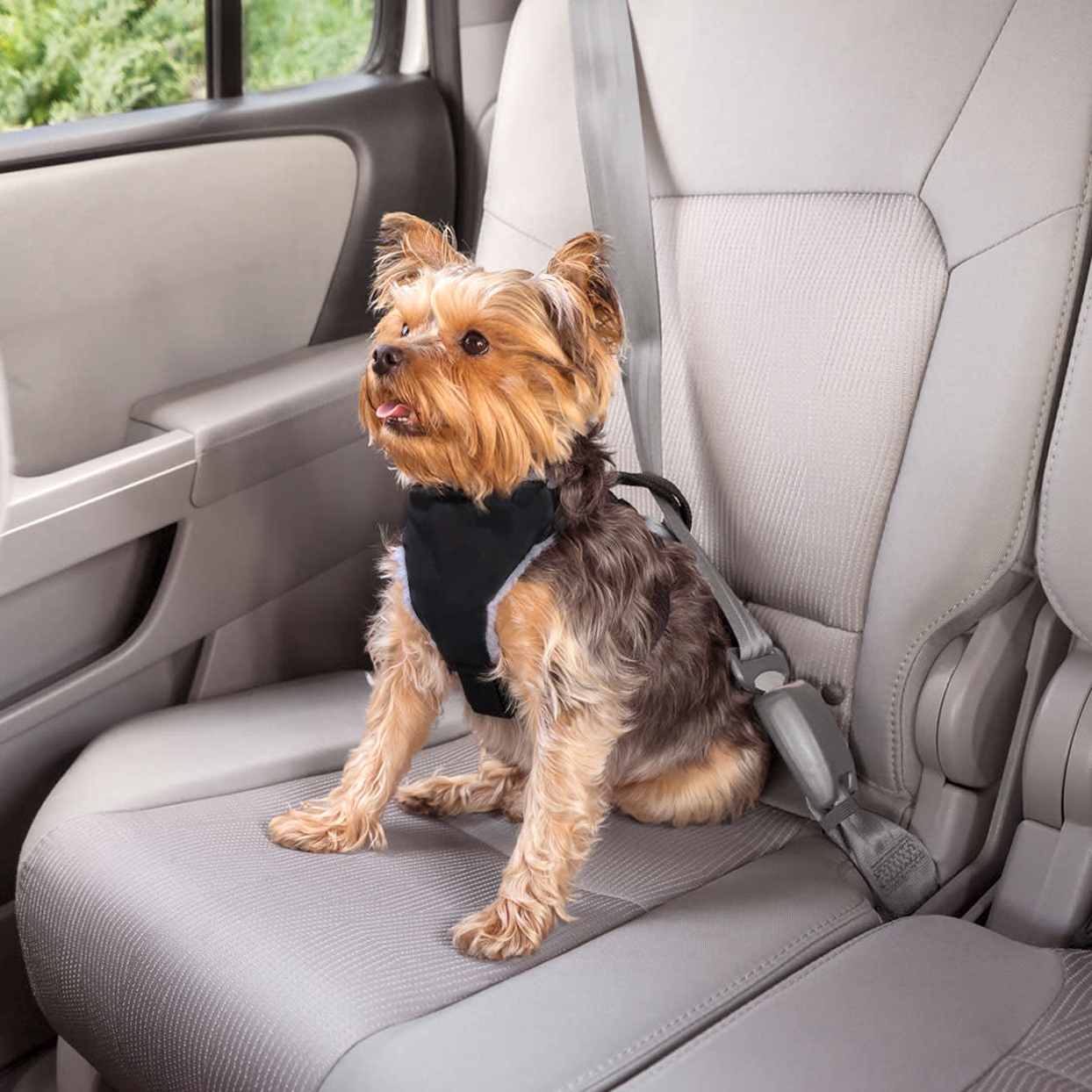 premiere-pet-car-safety-harness-for-small-dogs