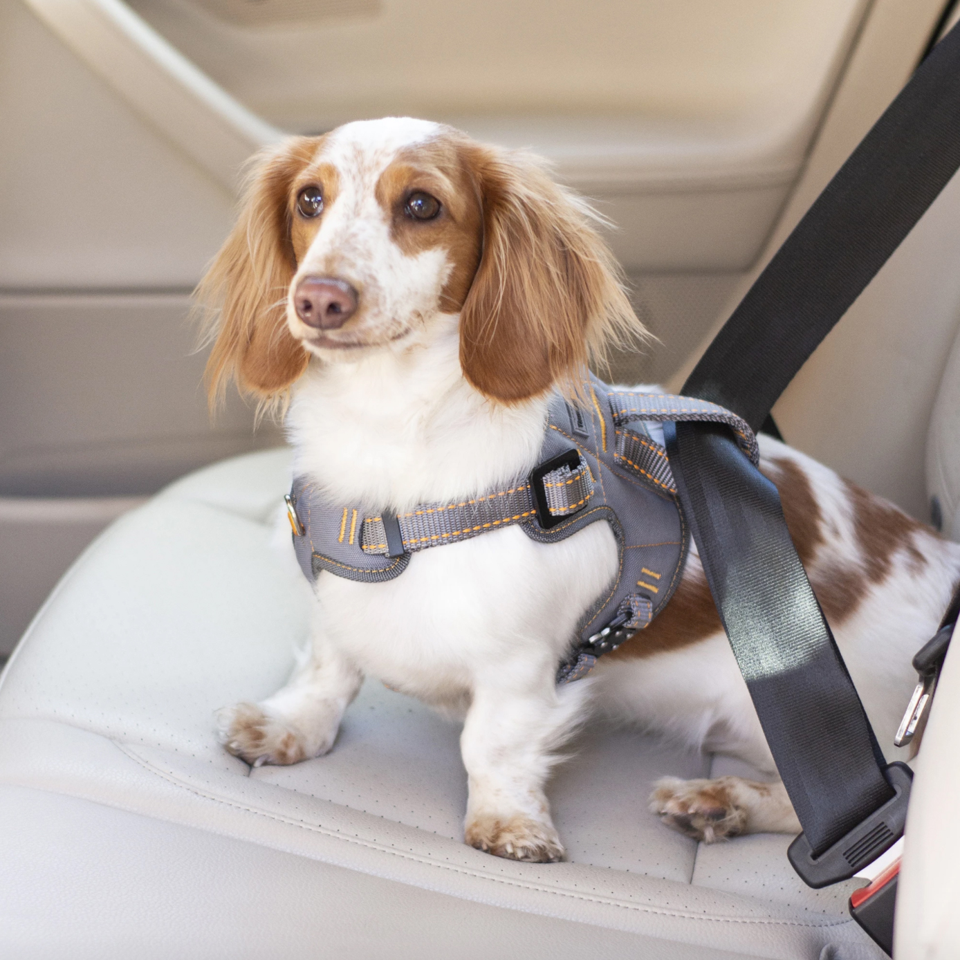 thunderbelt-car-restraint-harness-for-dogs