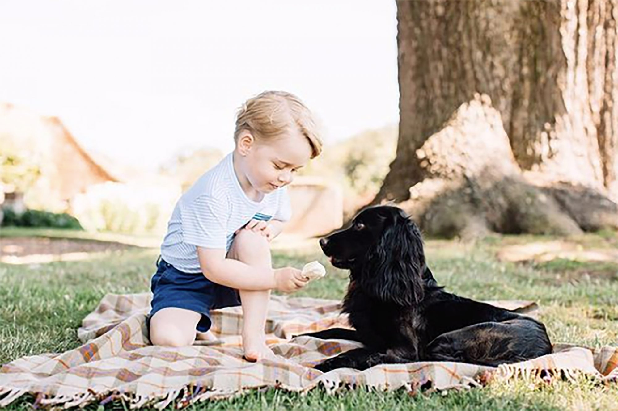 Prince George with family dog Lupo