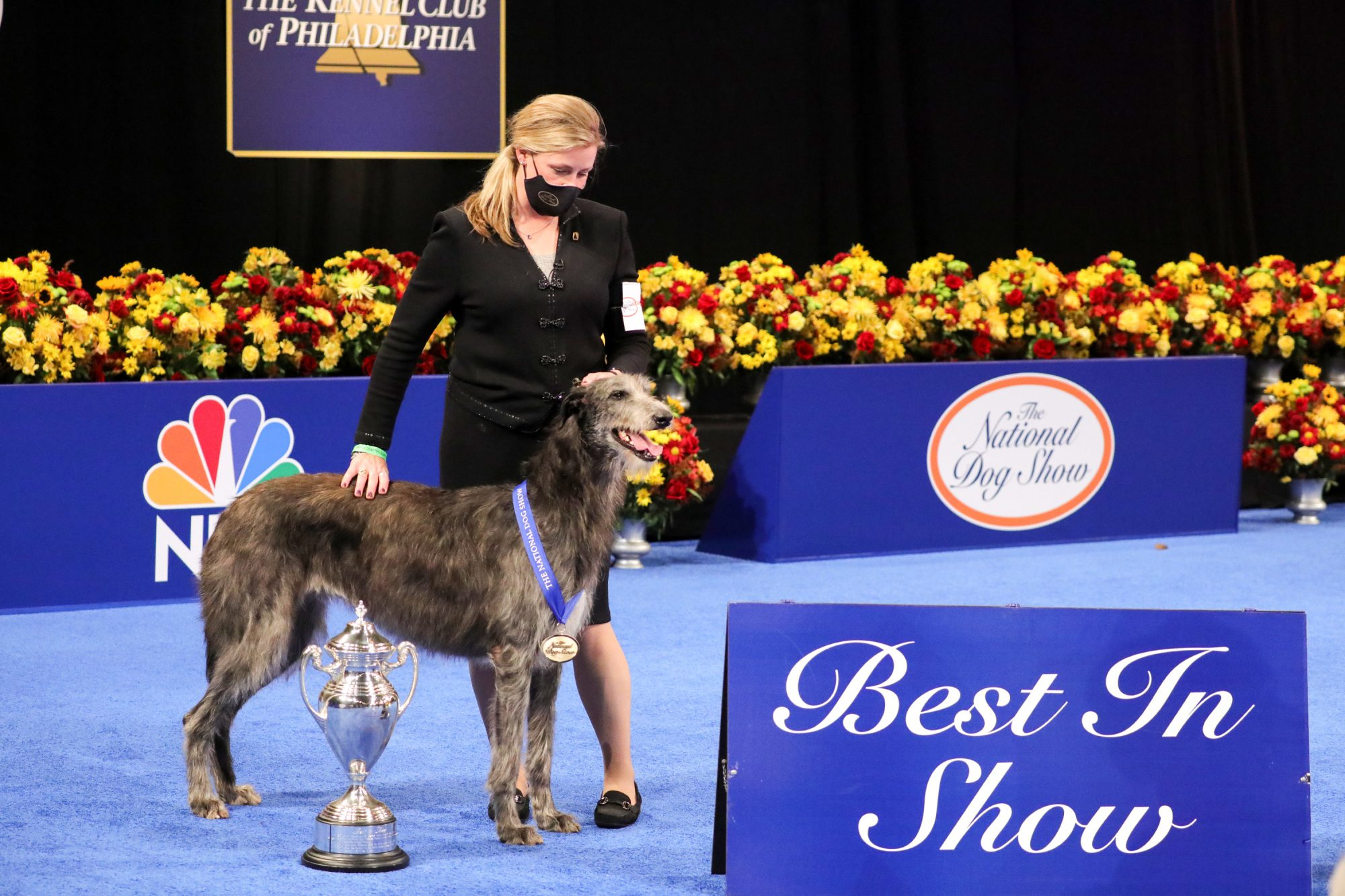 national-dog-show-scottish-deerhound