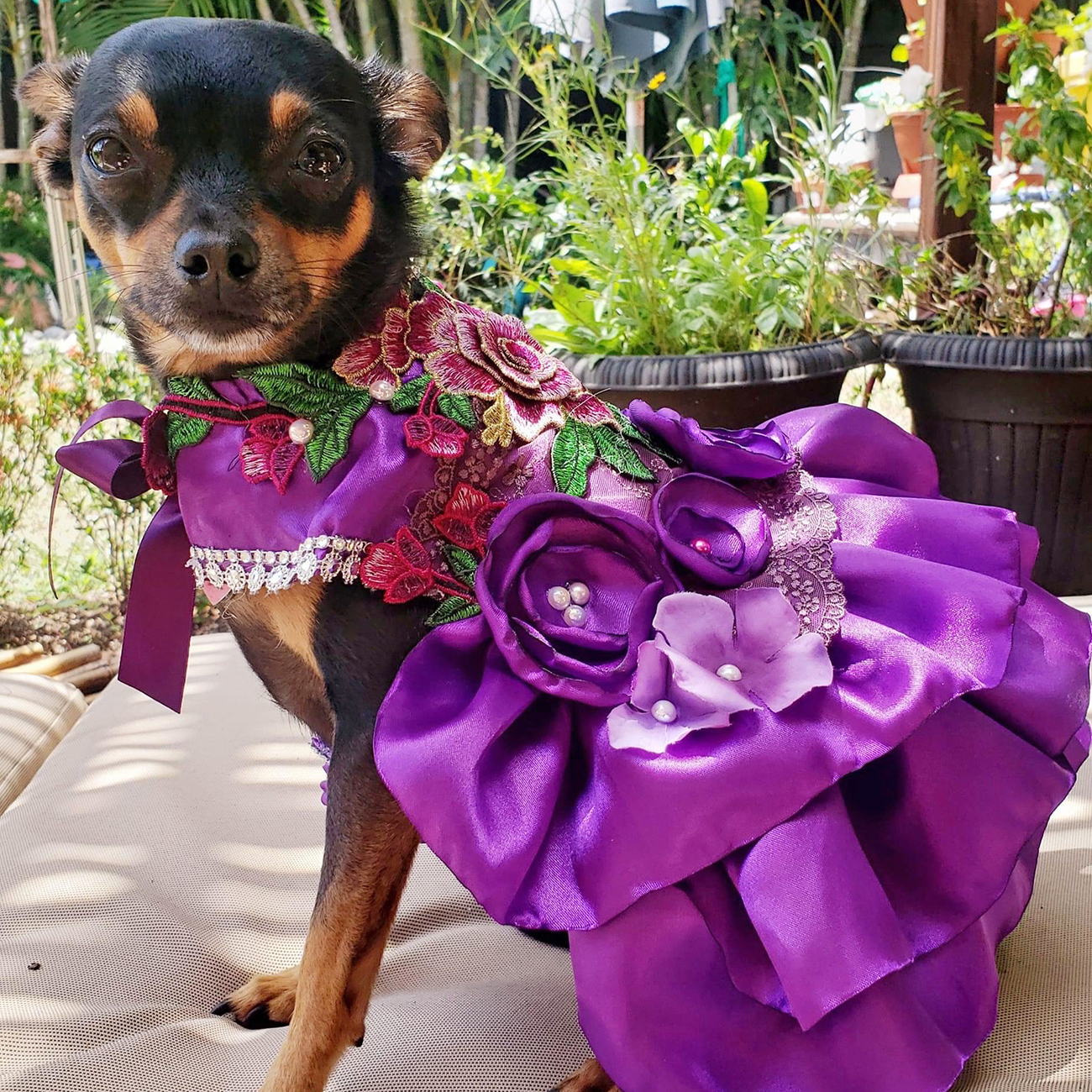 Presley the dog in purple floral gown