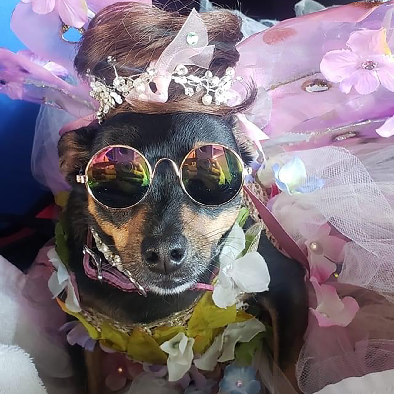 Presley the dog in a floral pink tutu and sunglasses