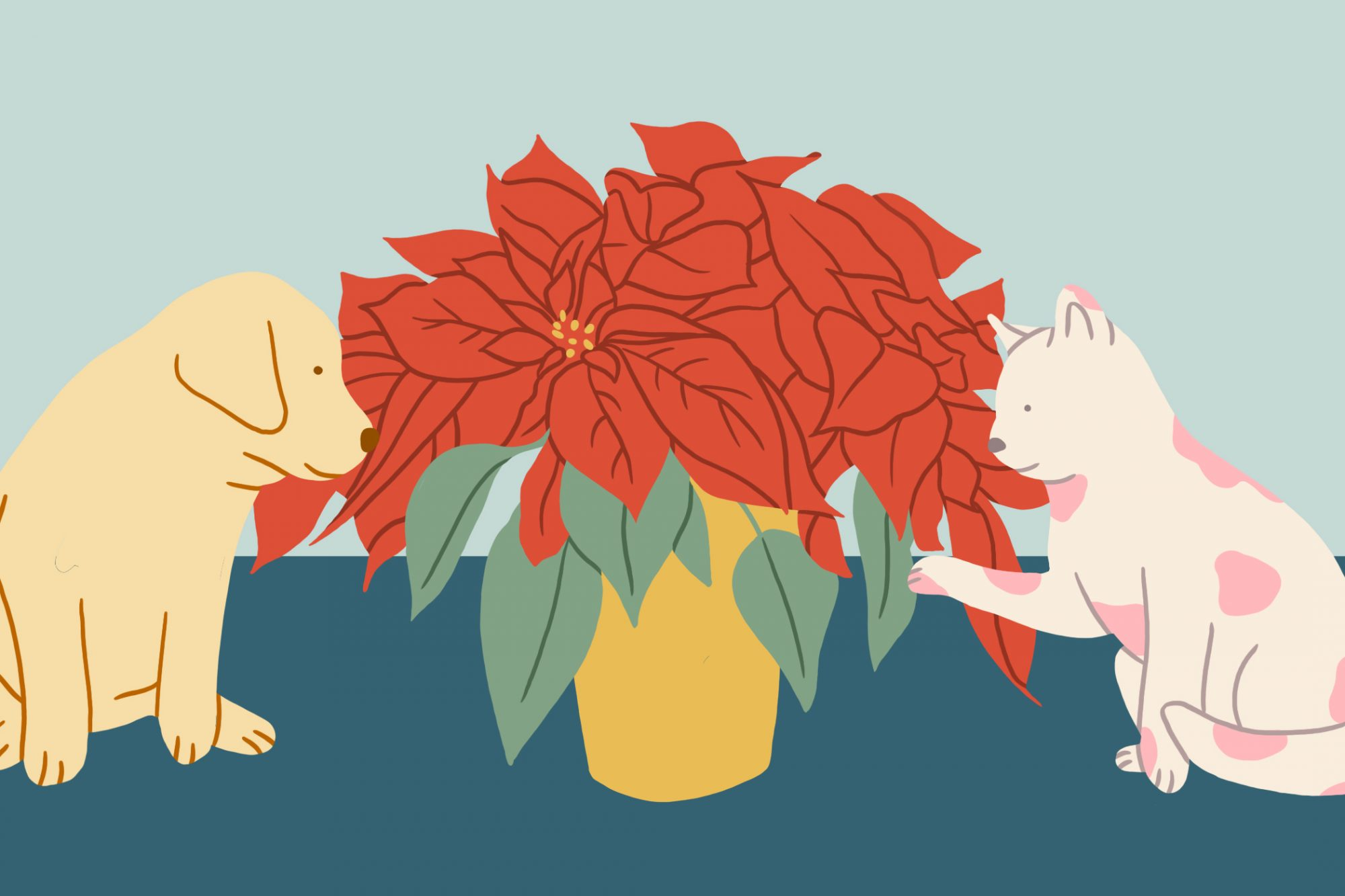 cat and dog with poinsettia