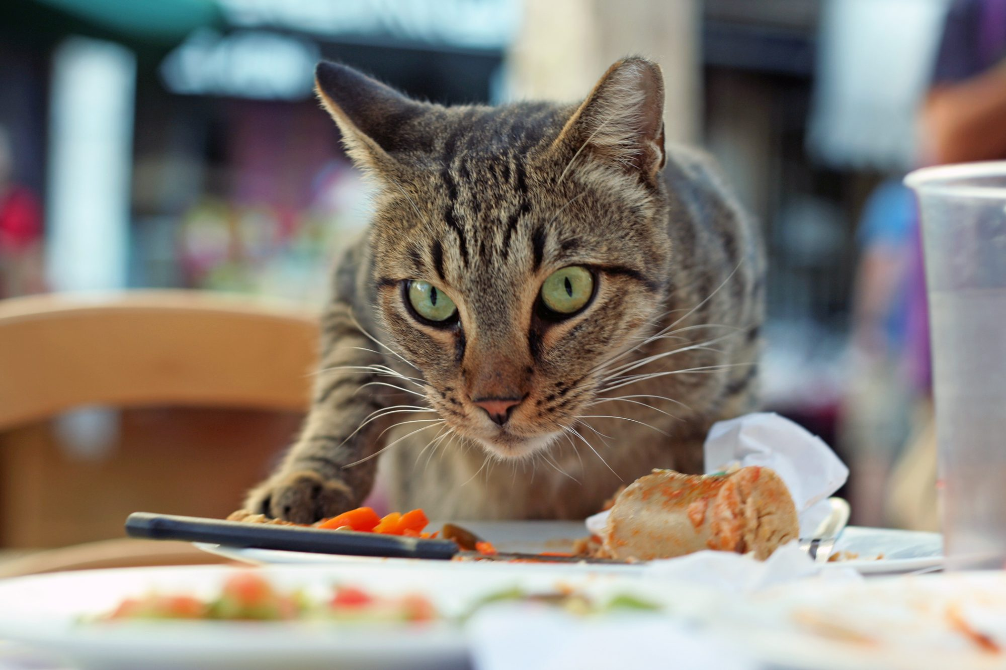 Striped cat eyes camera while creeping onto dinner table toward a plate of food