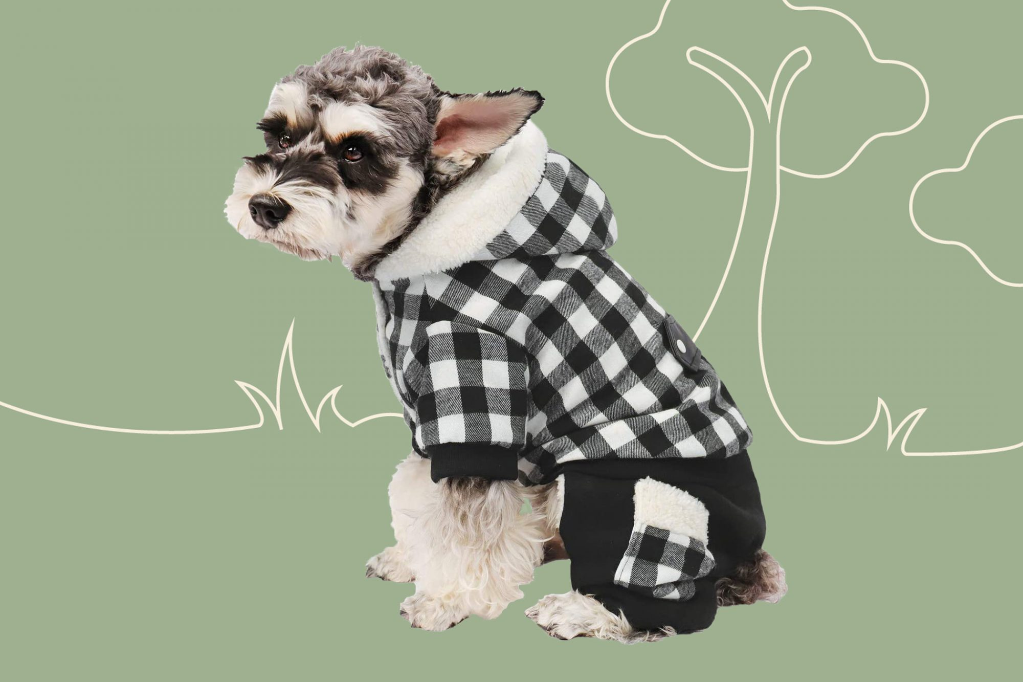 White and black small dog sits while dressed in a checkered black and white puppy coat