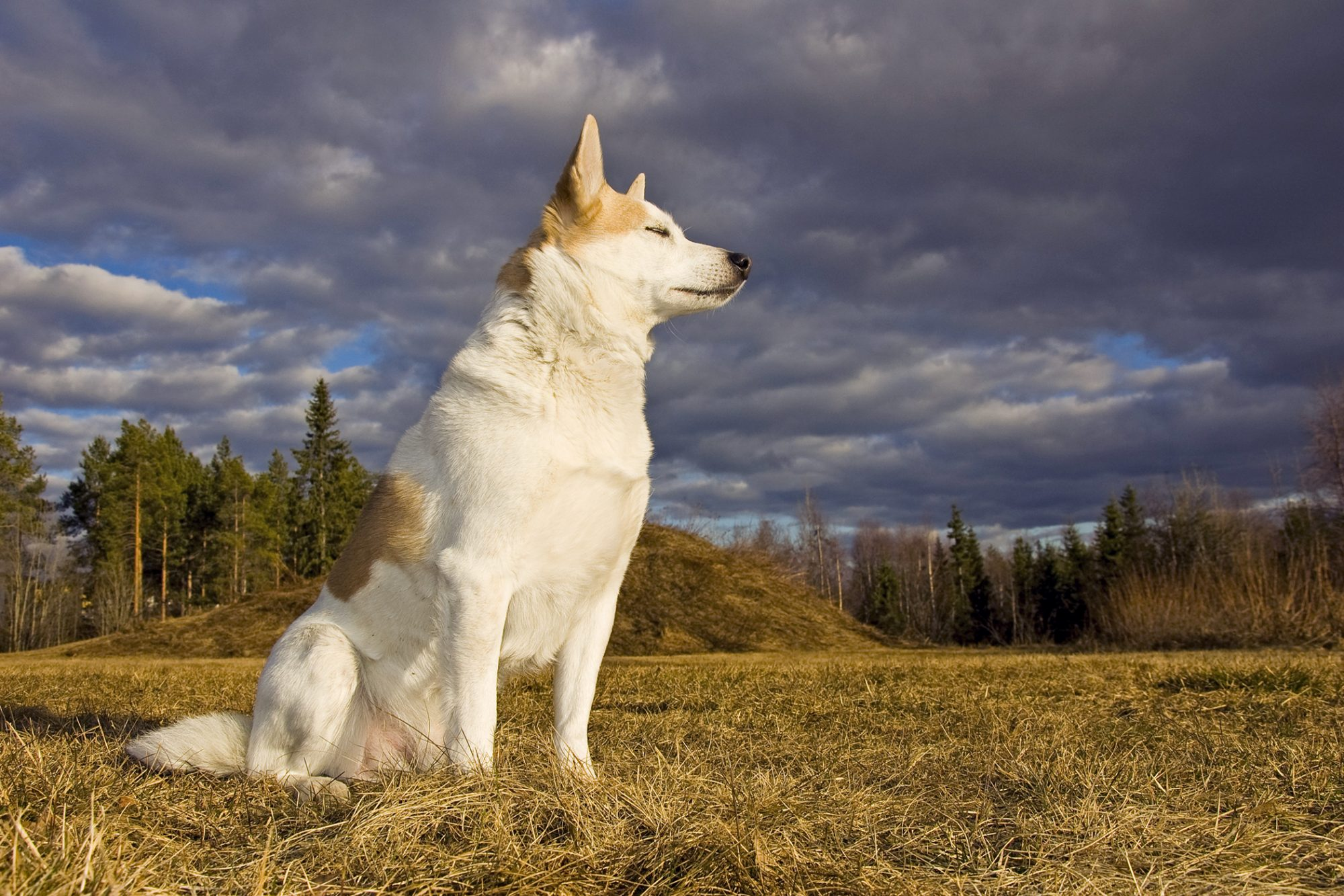 Dog sits on hay in clearing