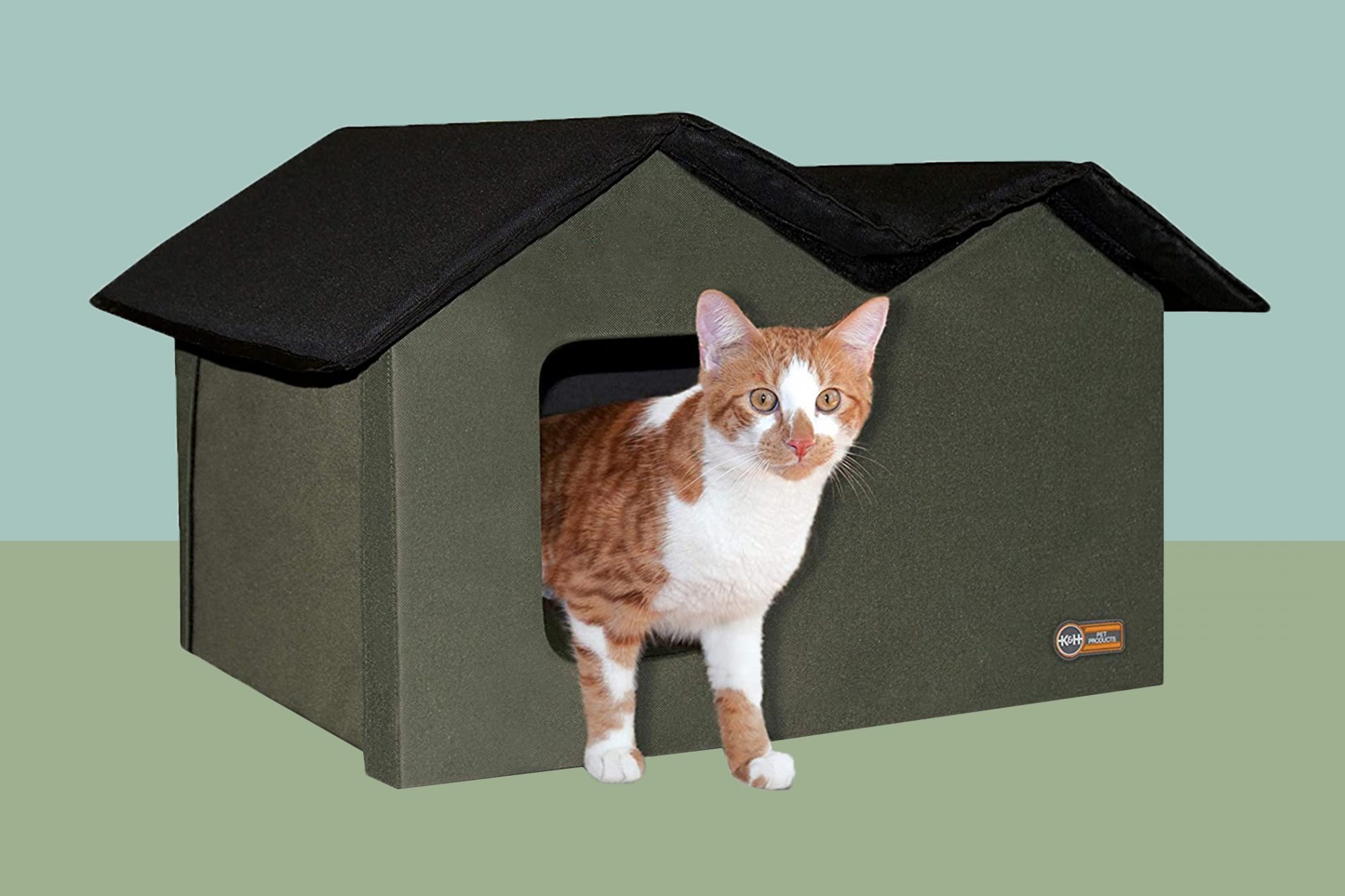 Orange and white cat exits heated cat house