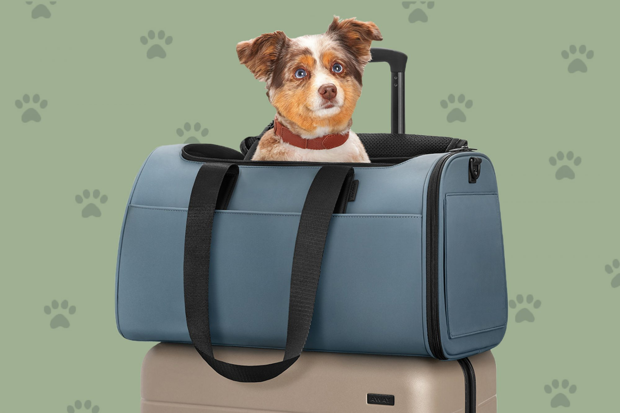 Speckled puppy sits in ocean blue pet carrier on top of large suitcase