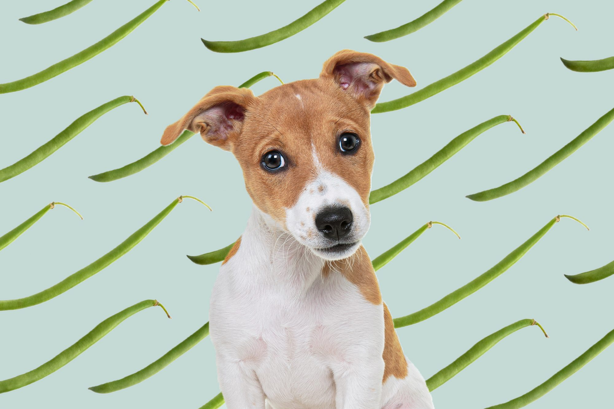 dog with green bean background