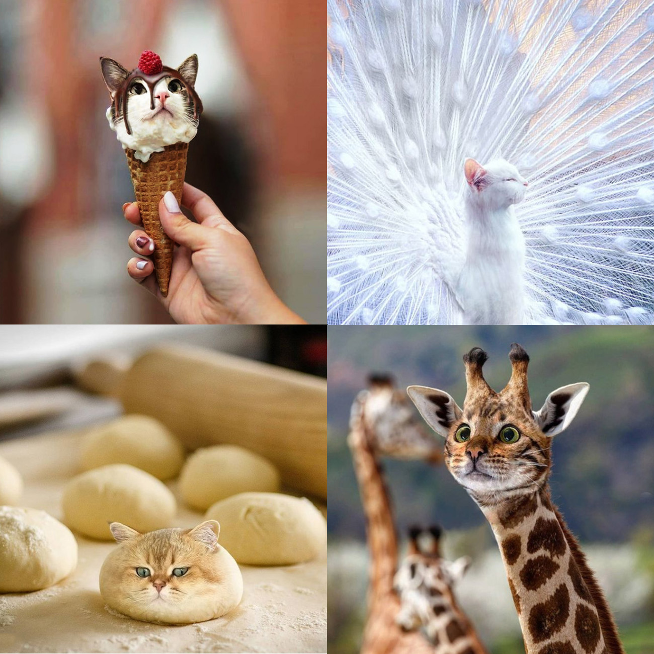 Collage of cat faces photoshopped onto an ice cream cone, peacock, ball of dough and giraffe