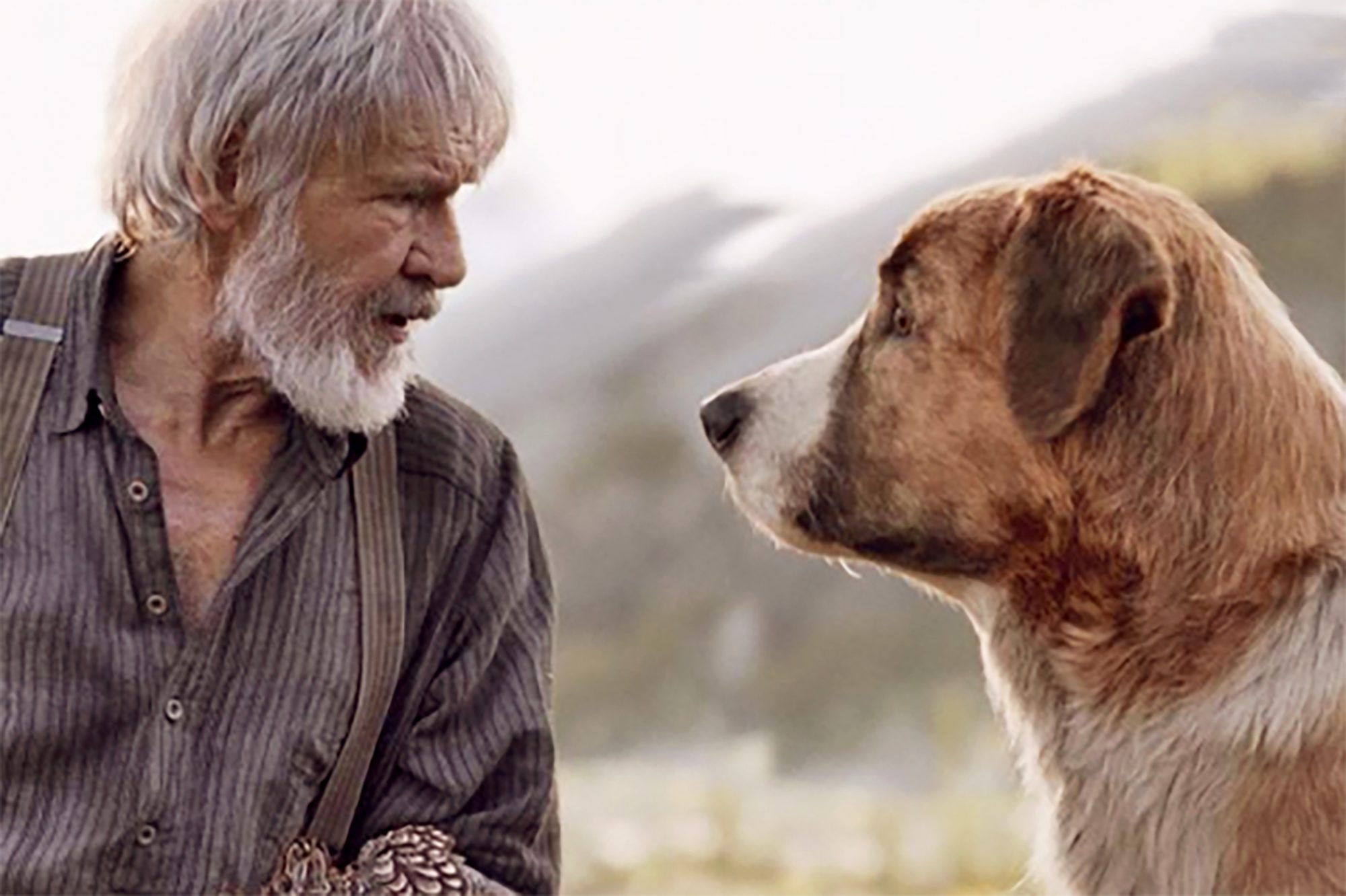 Older bearded actor and adult dog look at each other