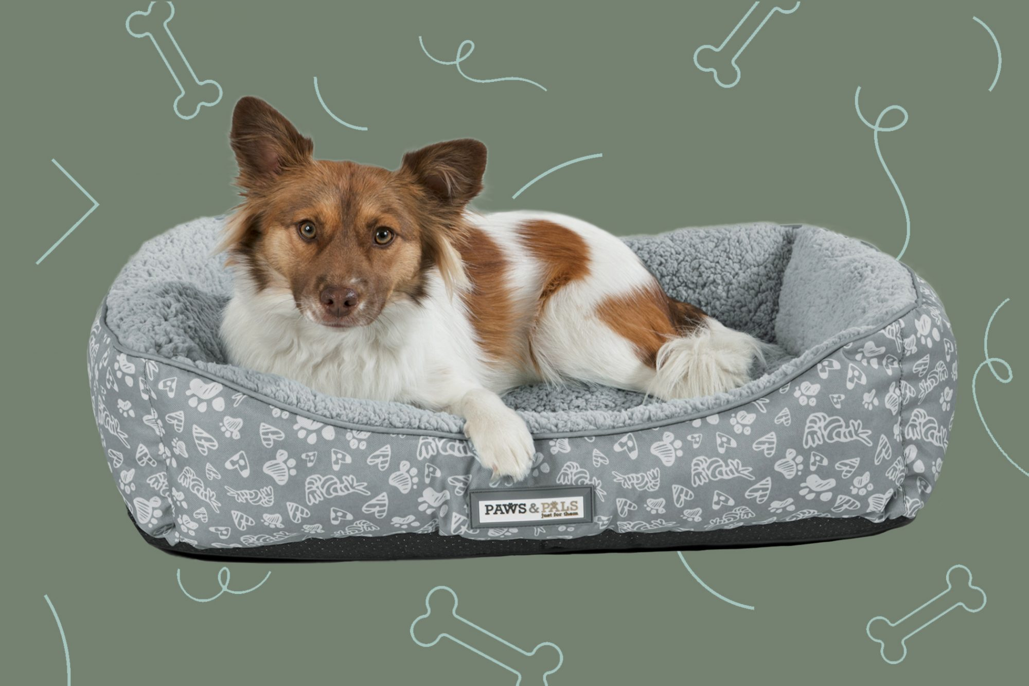 Small dog laws in Paws and Pals heated dog bed, illustrated background