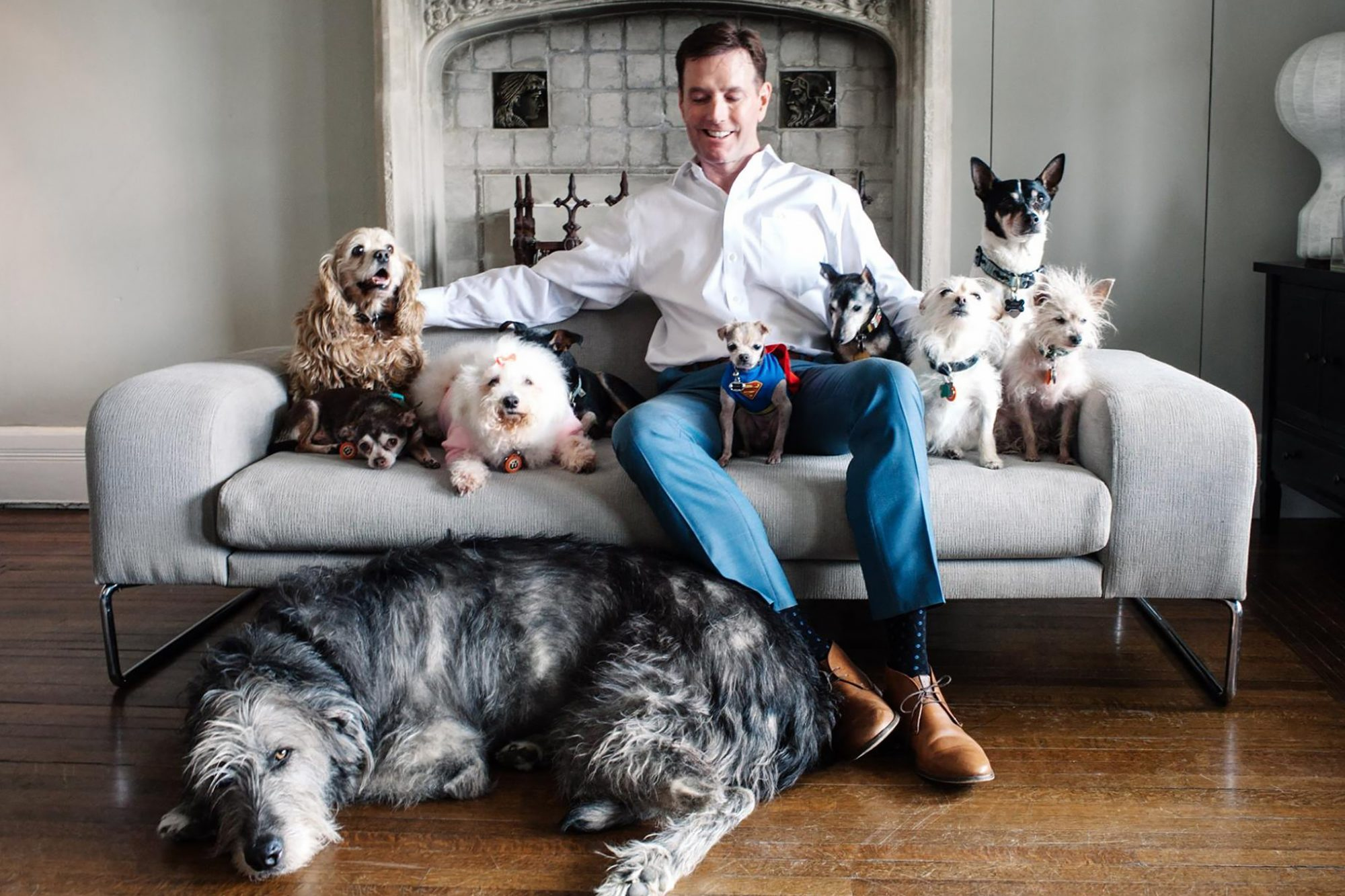 Adult man sits on couch surrounded by senior rescue dogs