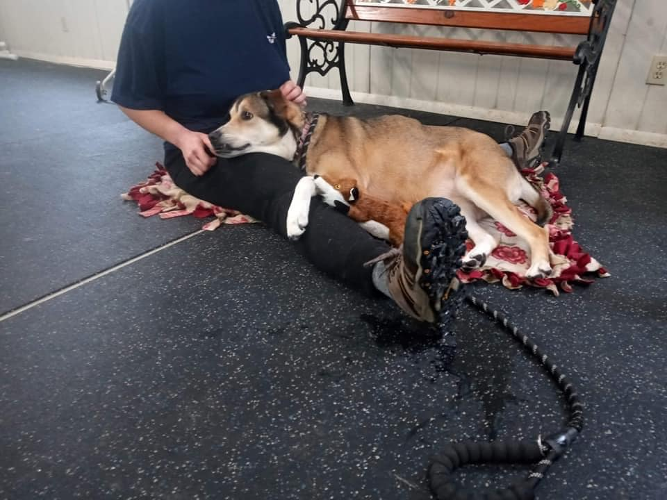 Dog lays on floor and in person's lap