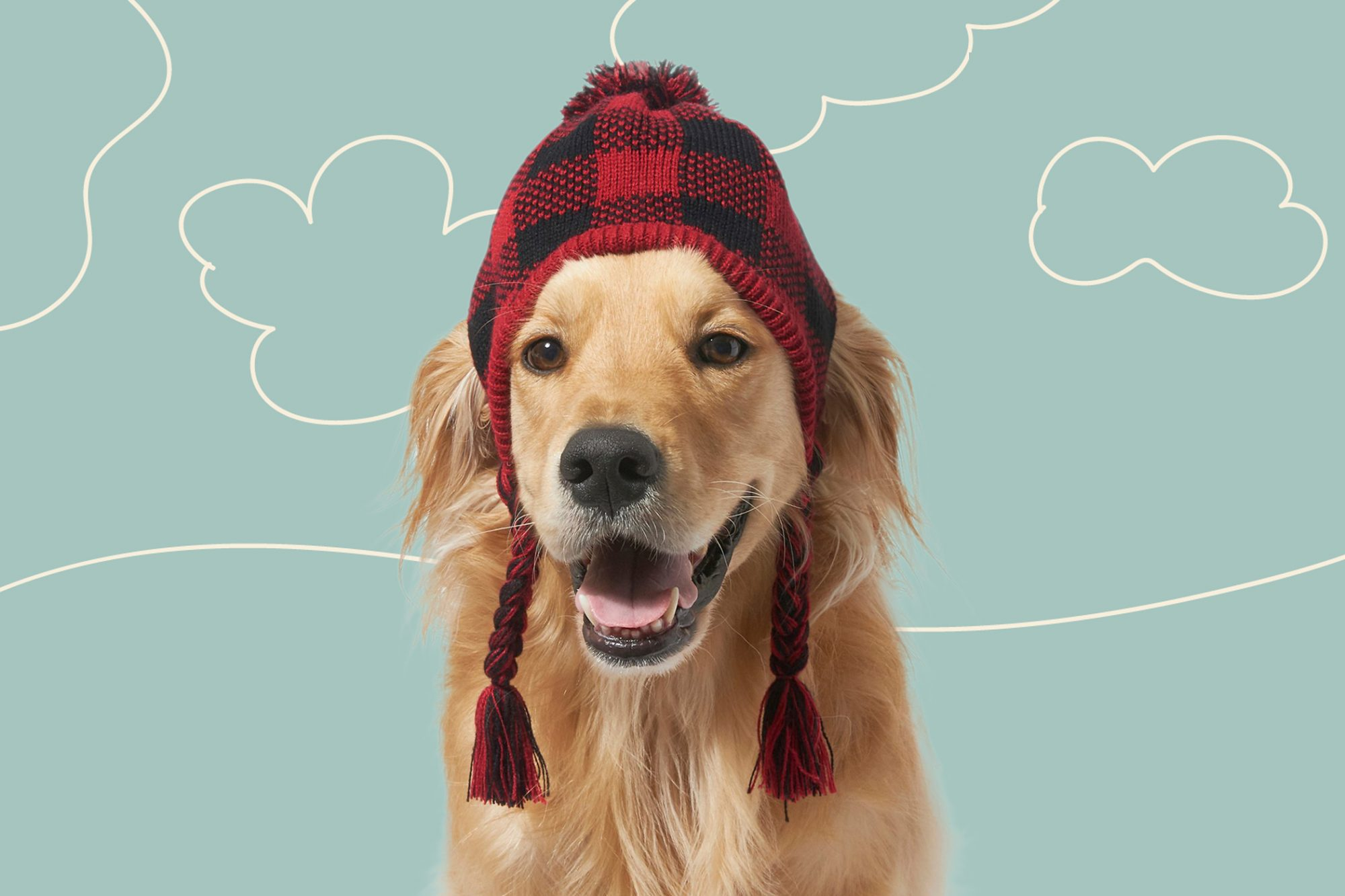 Retriever wears winter hat with tassels