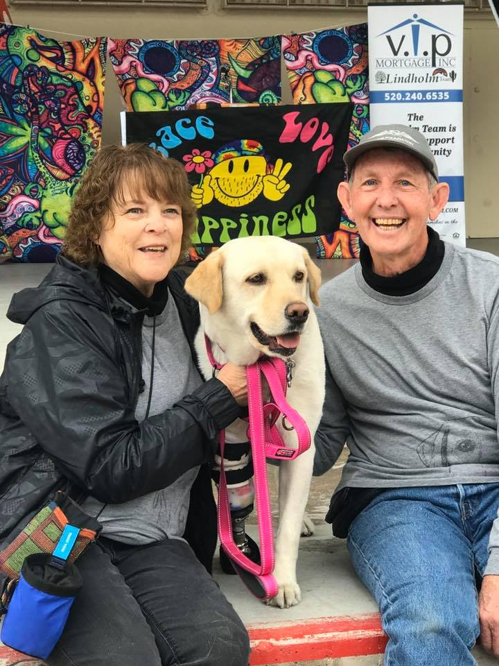 Athena the Labrador with her new family