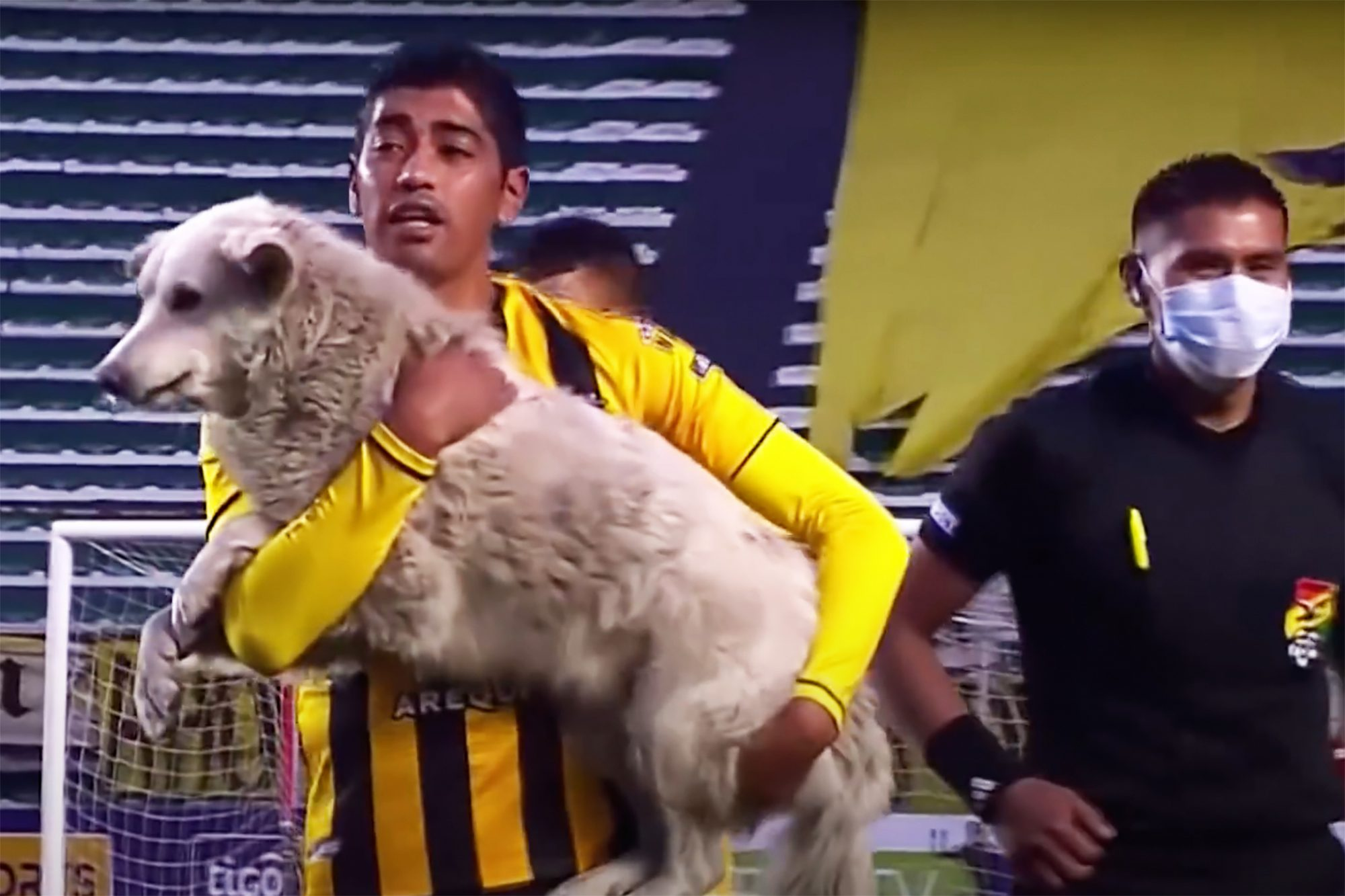 soccer player taking dog off the field