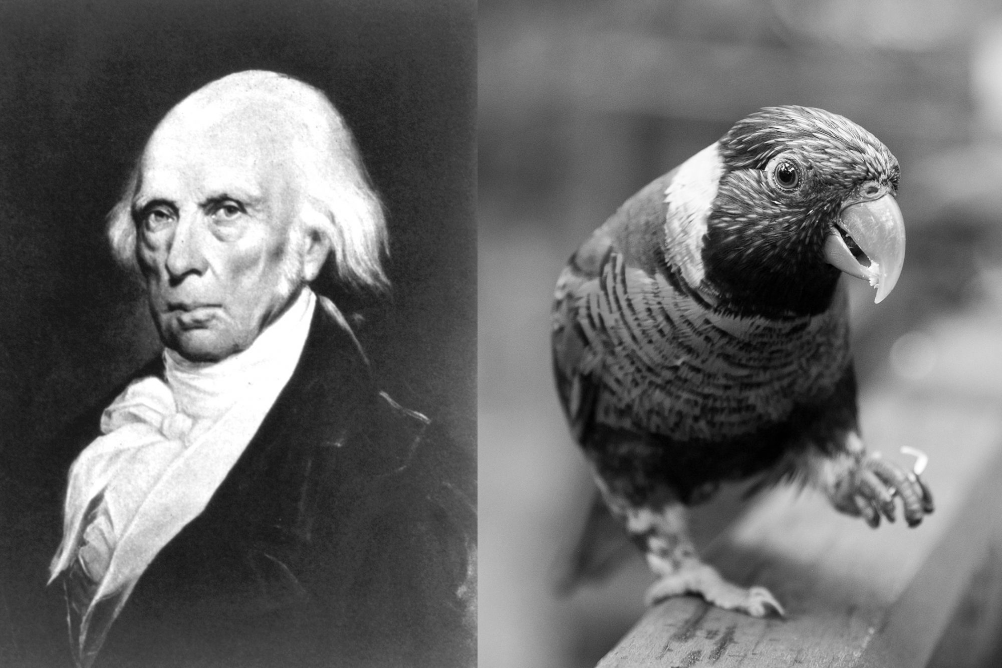 Composite of James Madison and stock photo of bird