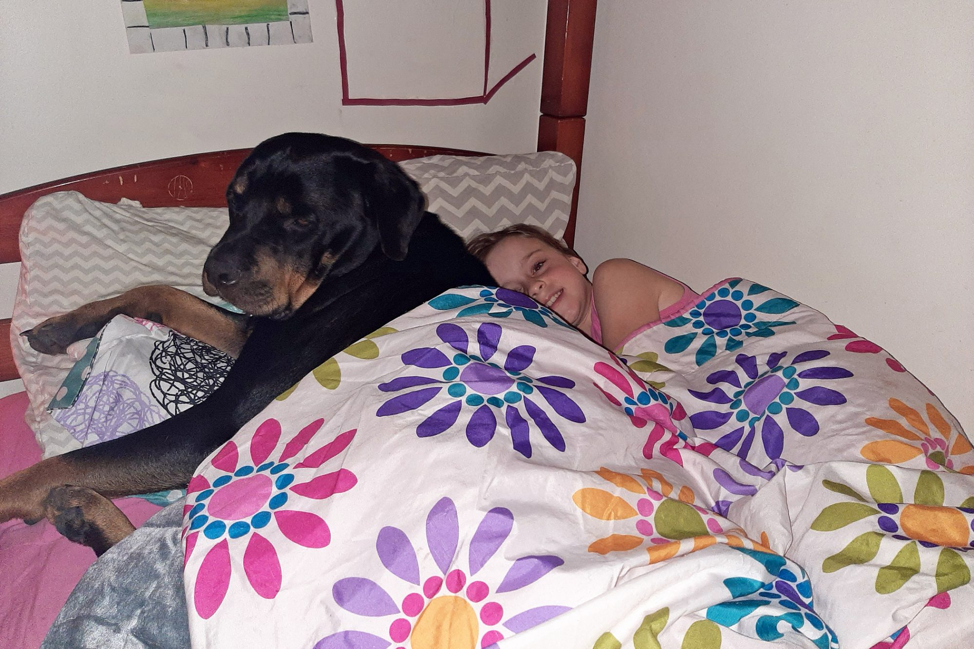 Large dog crowds child's bed