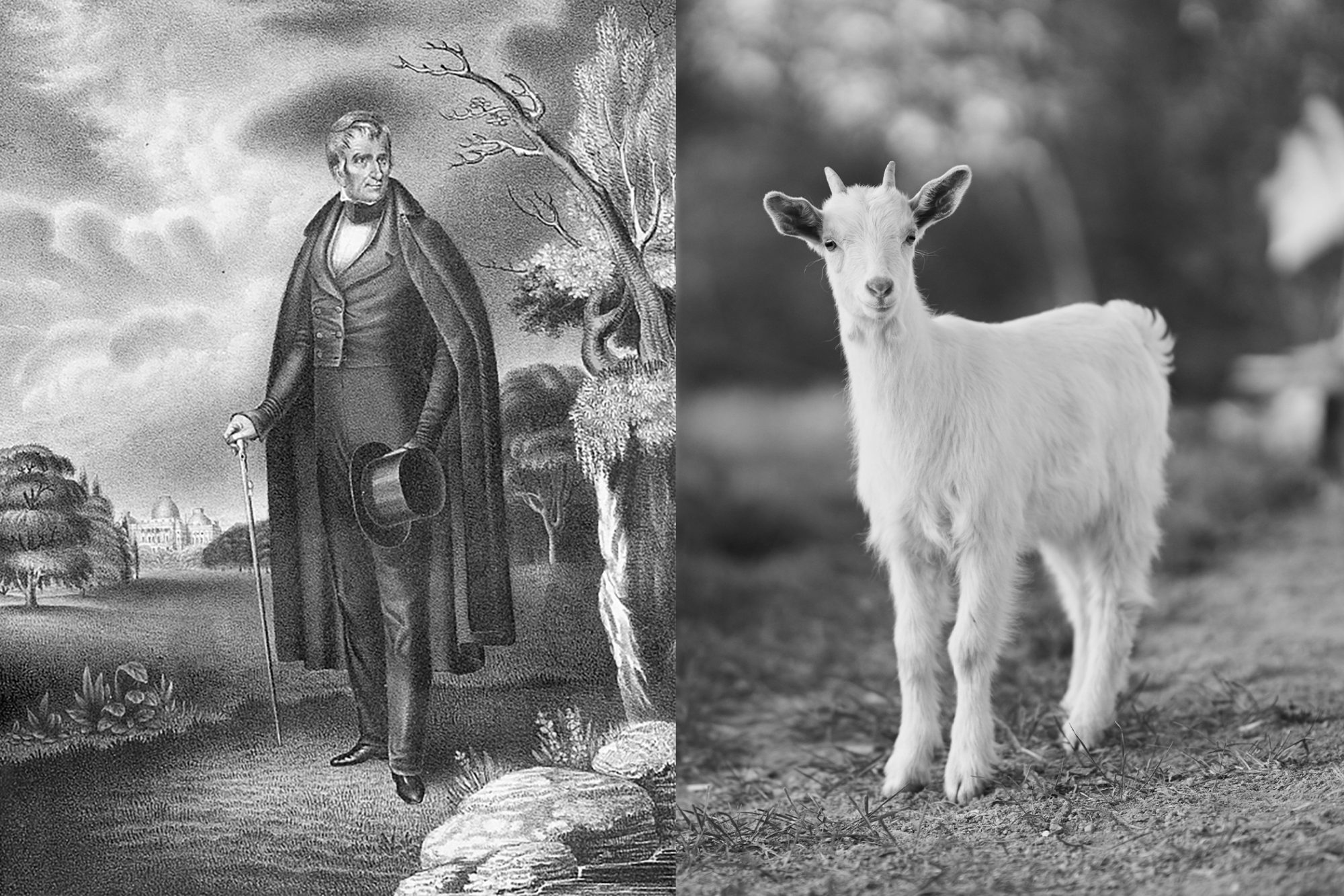 Composite of William Henry Harrison and goat