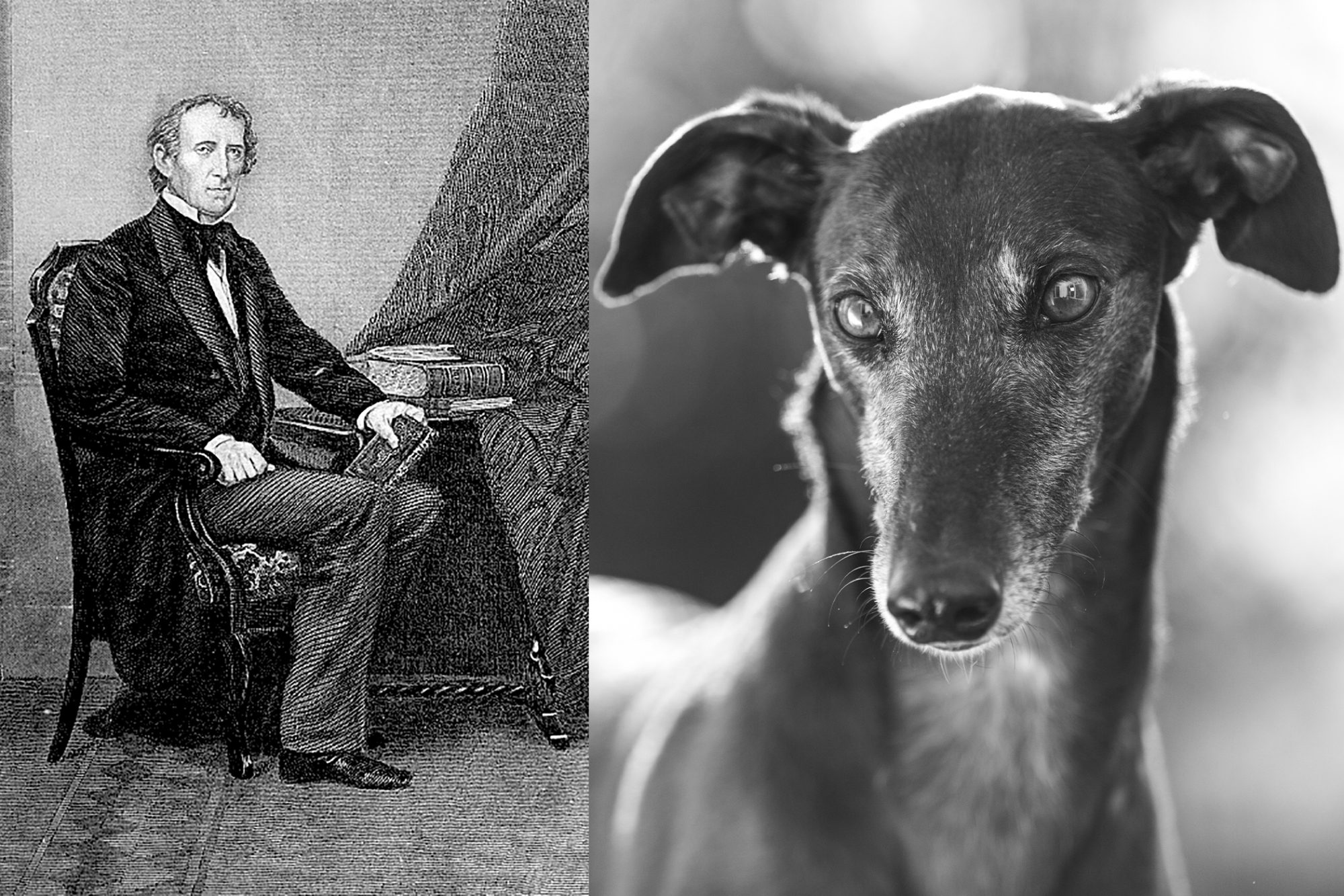 Composite of John Tyler and greyhound