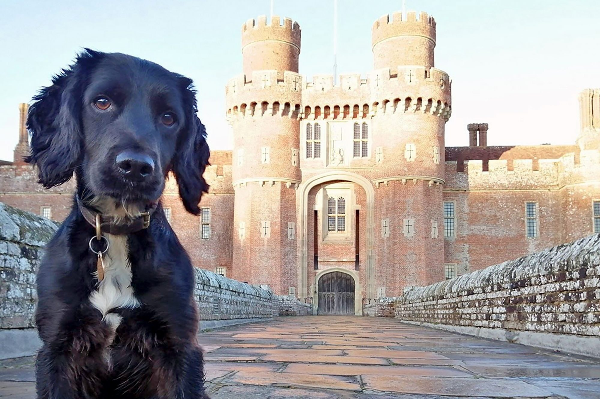 Black dog sits in front of castle in Sussex