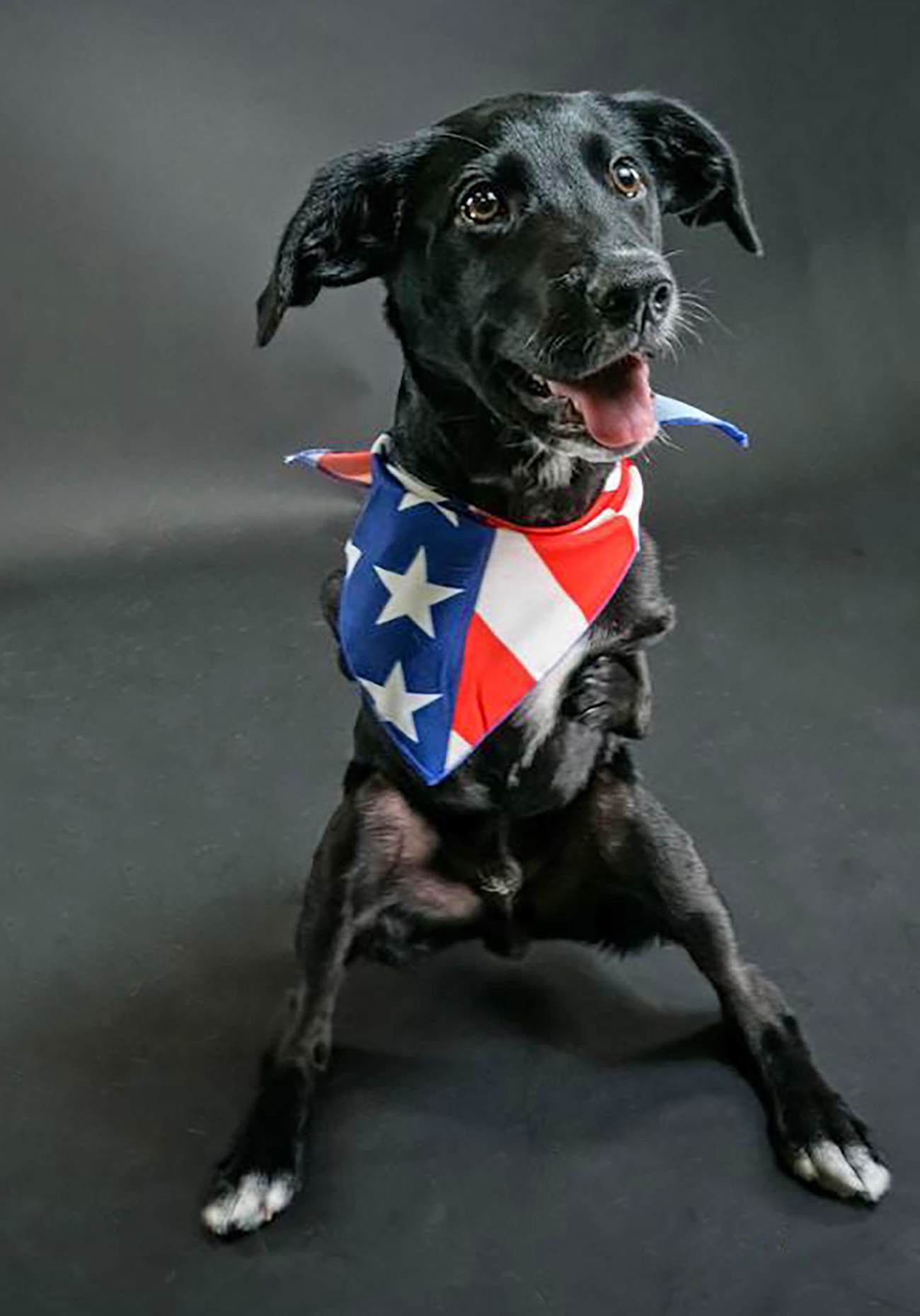 Jett, a differently abled black puppy, sits and smiles for the camera with colorful bandana on