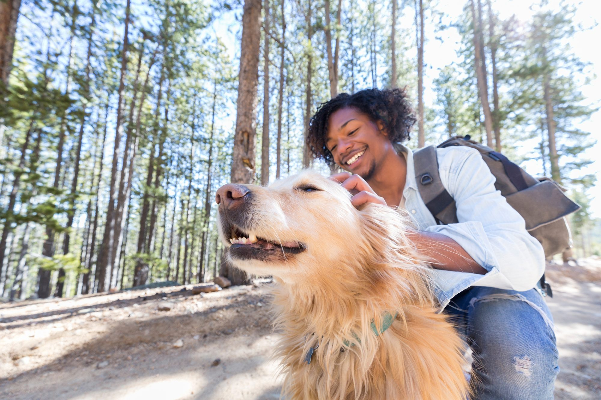 Shaggy blond dog gets pet on forest trail