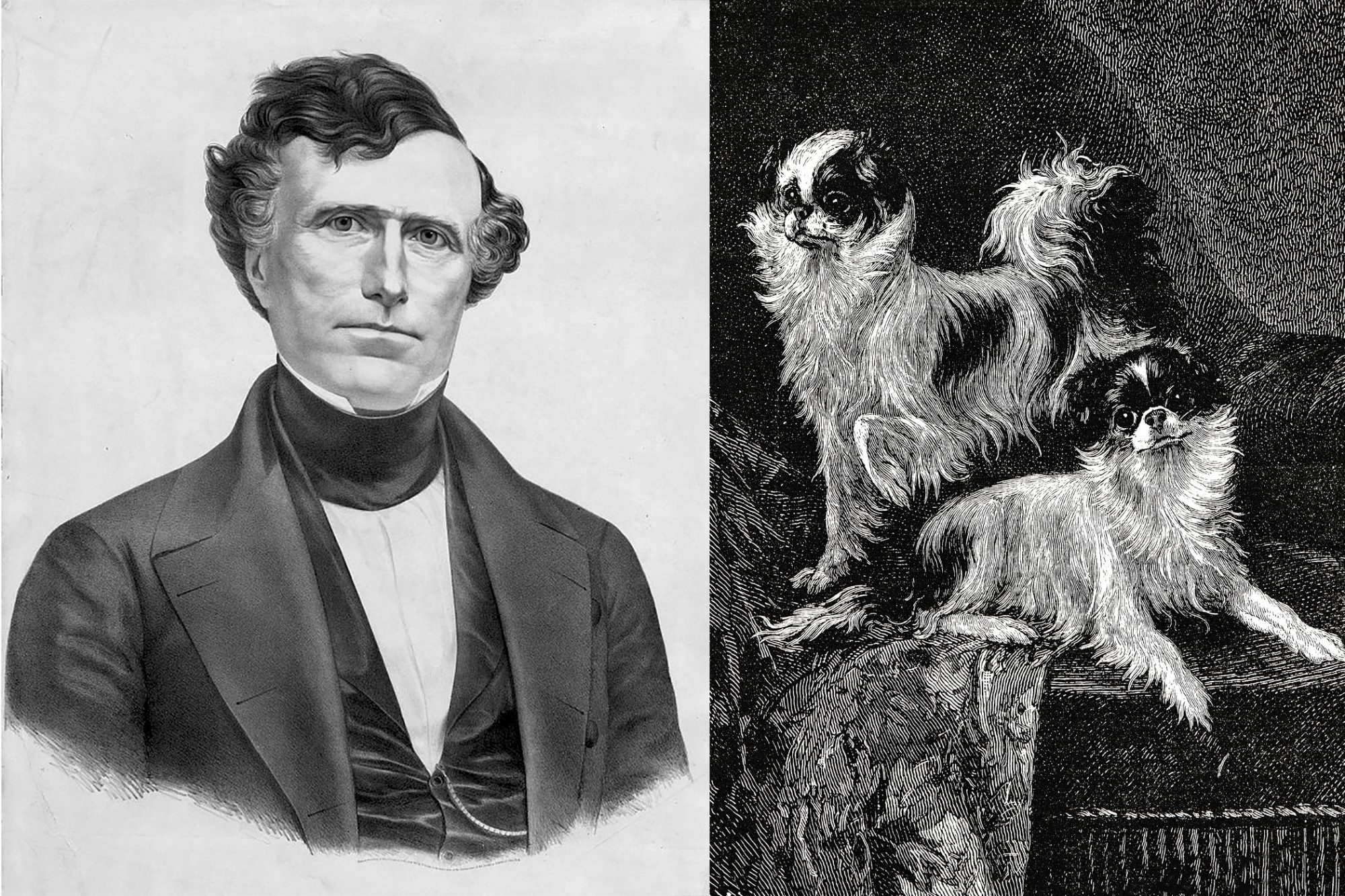 Composite of Franklin Pierce and sketch of two dogs