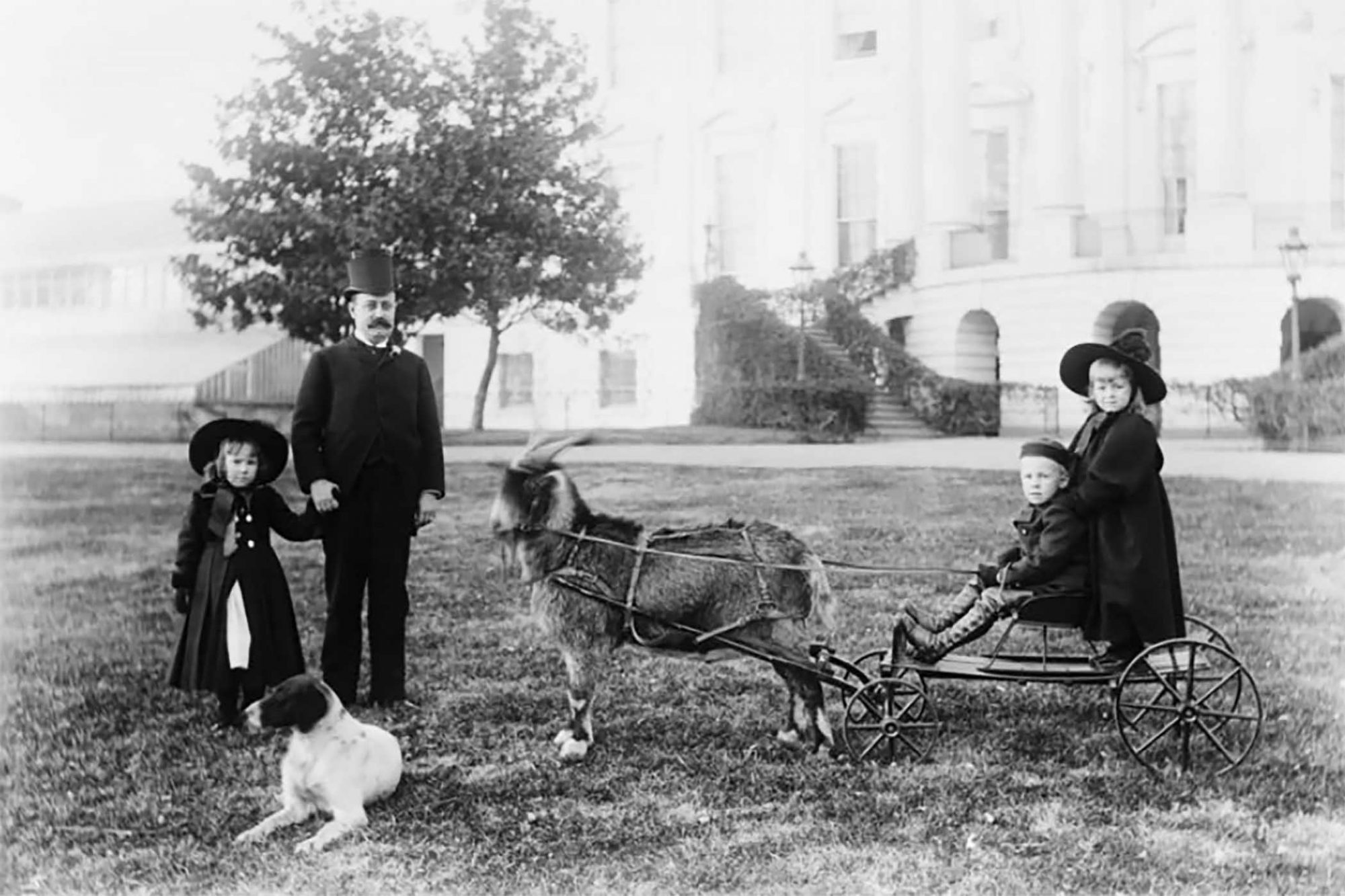 Photograph of Benjamin Harrison , family and animals on the White House lawn