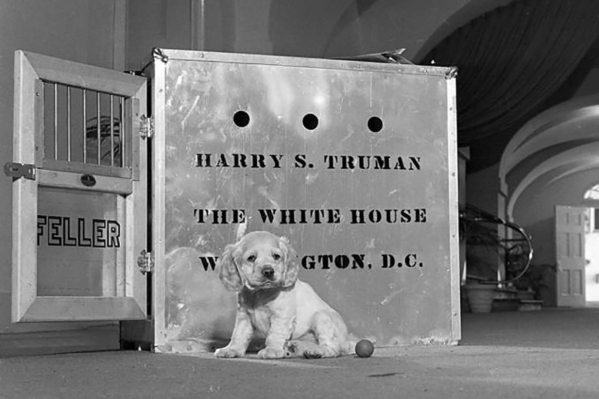 Photograph of Harry S. Truman's puppy