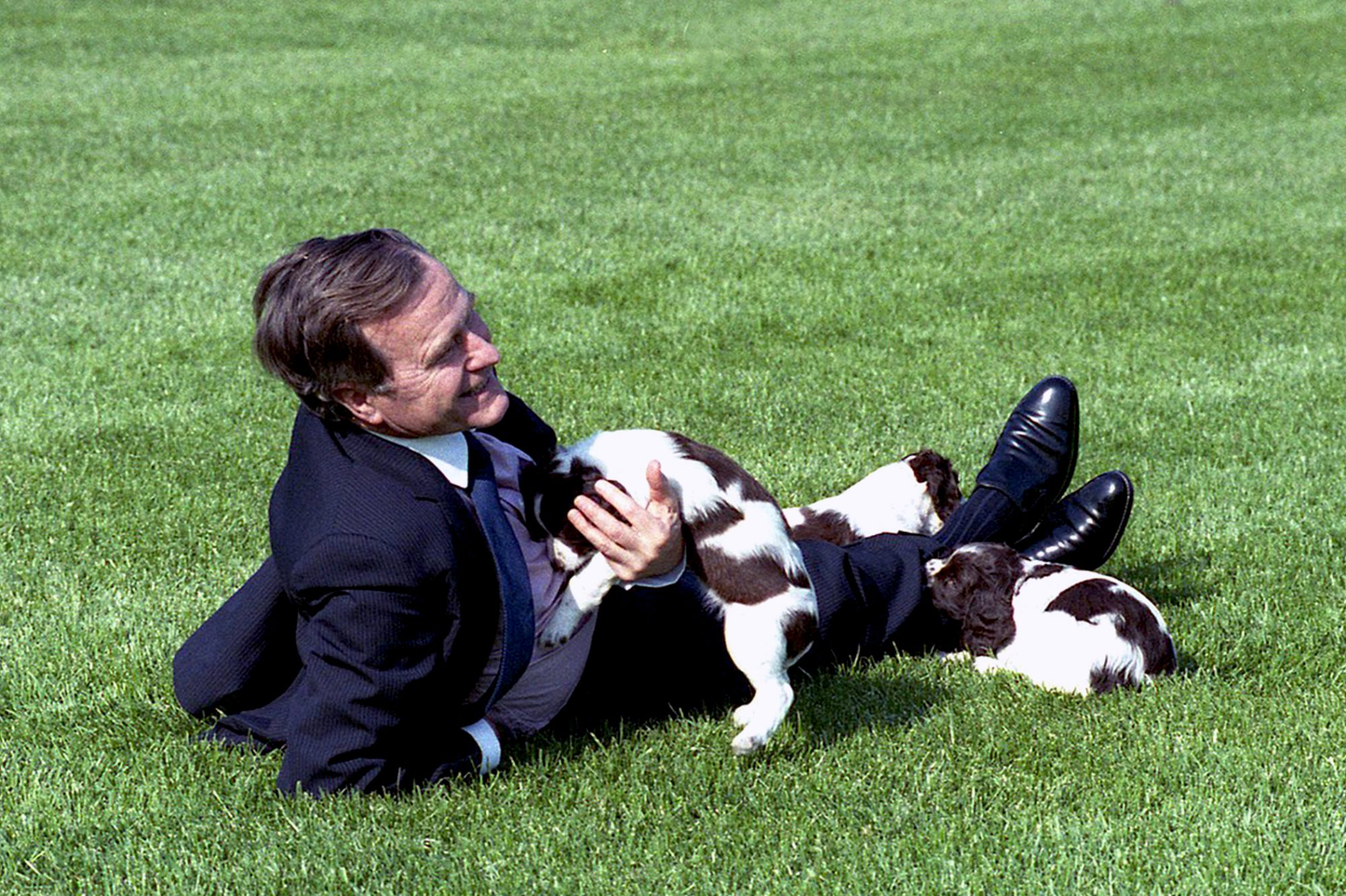 Photograph of George H.W. Bush laying on lawn and cuddling three puppies