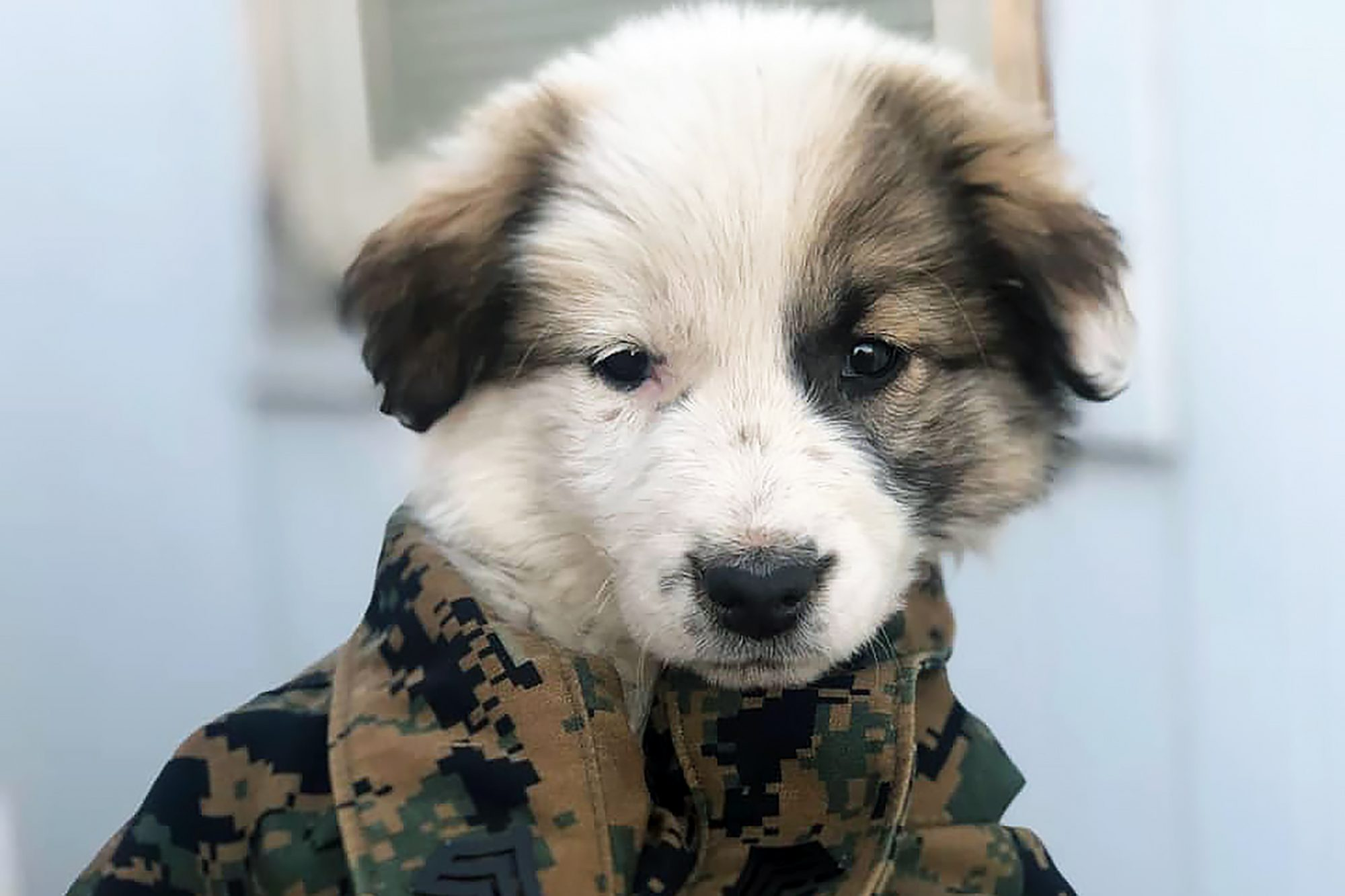 Marshmallow in camo