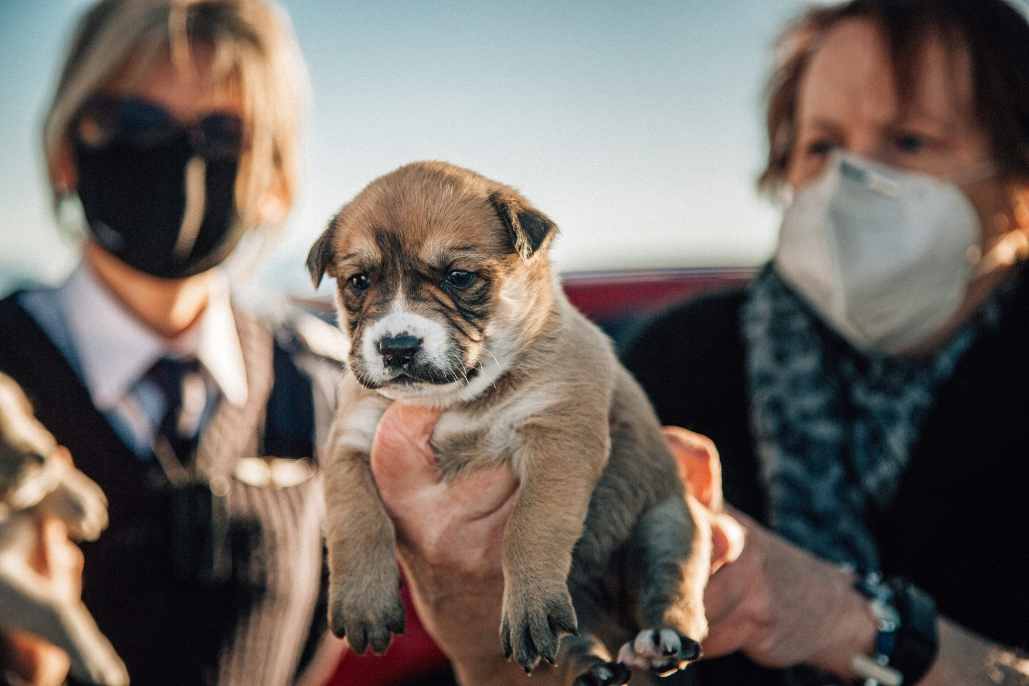 woman holding brown puppy close up