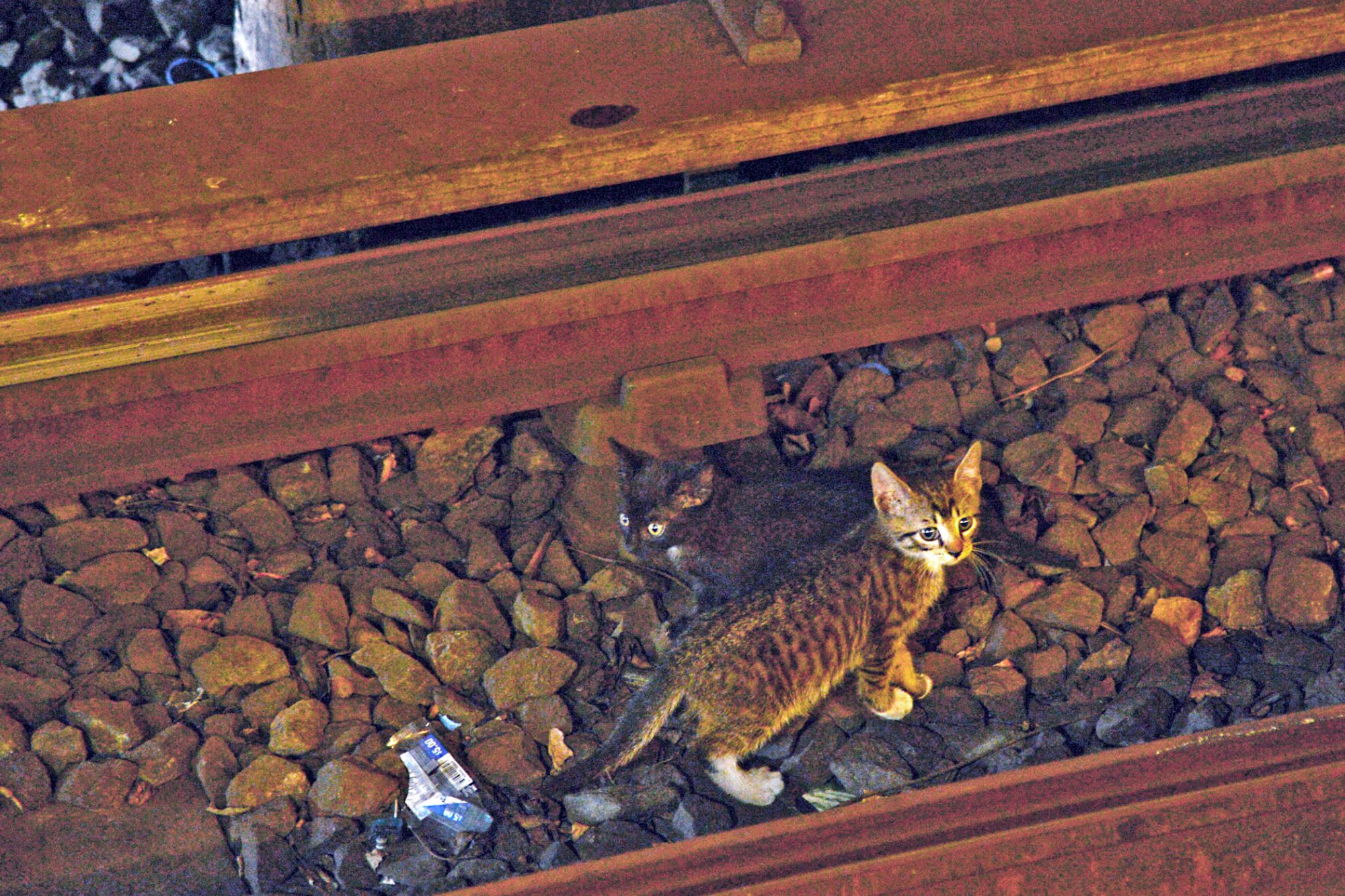 Small kitten stands in middle of train tracks