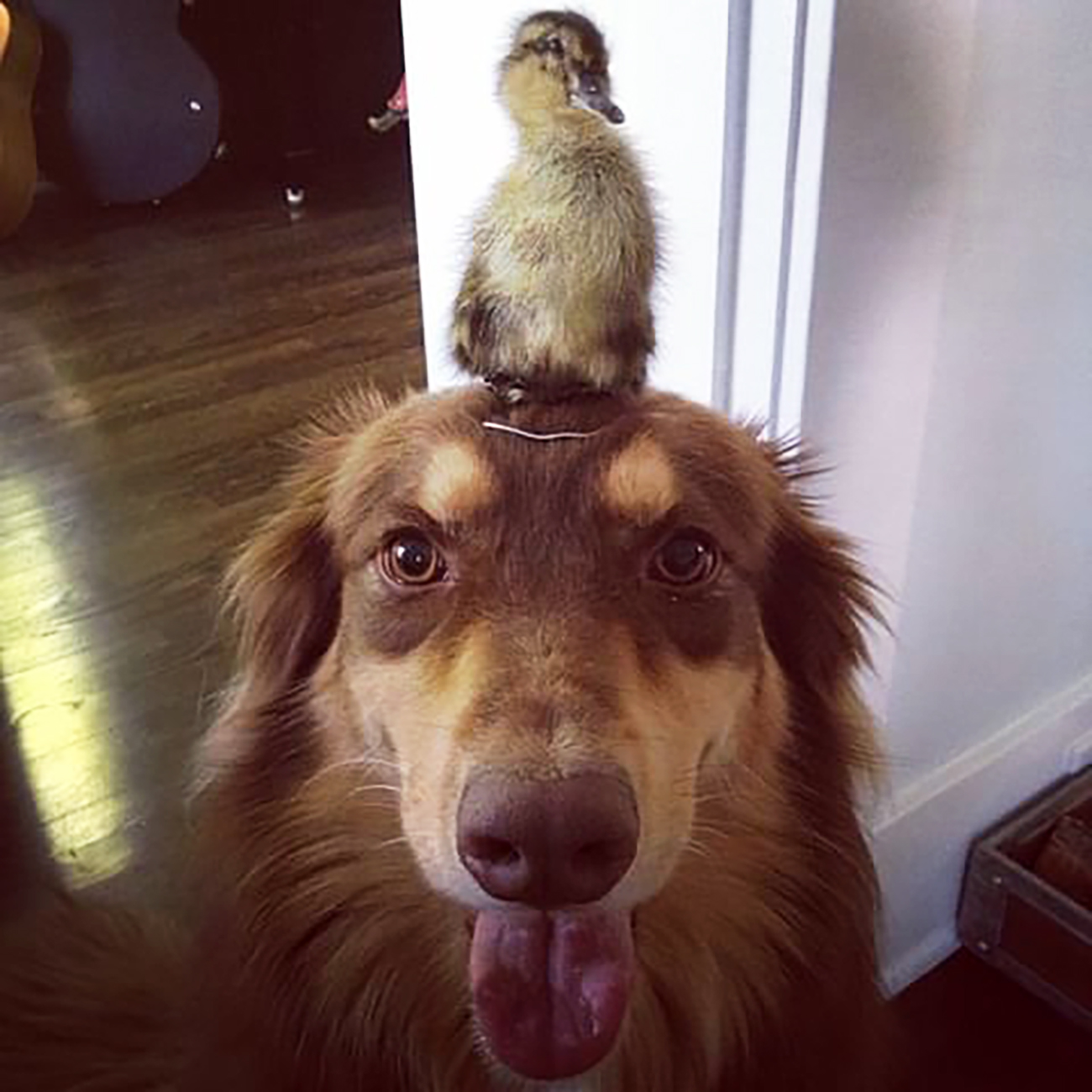 Photo of Amanda Seyfried's dog with a duckling on their head