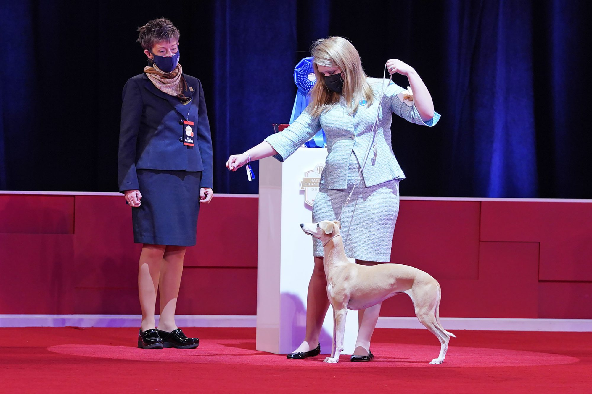Whippet the dog wins AKC National Championship