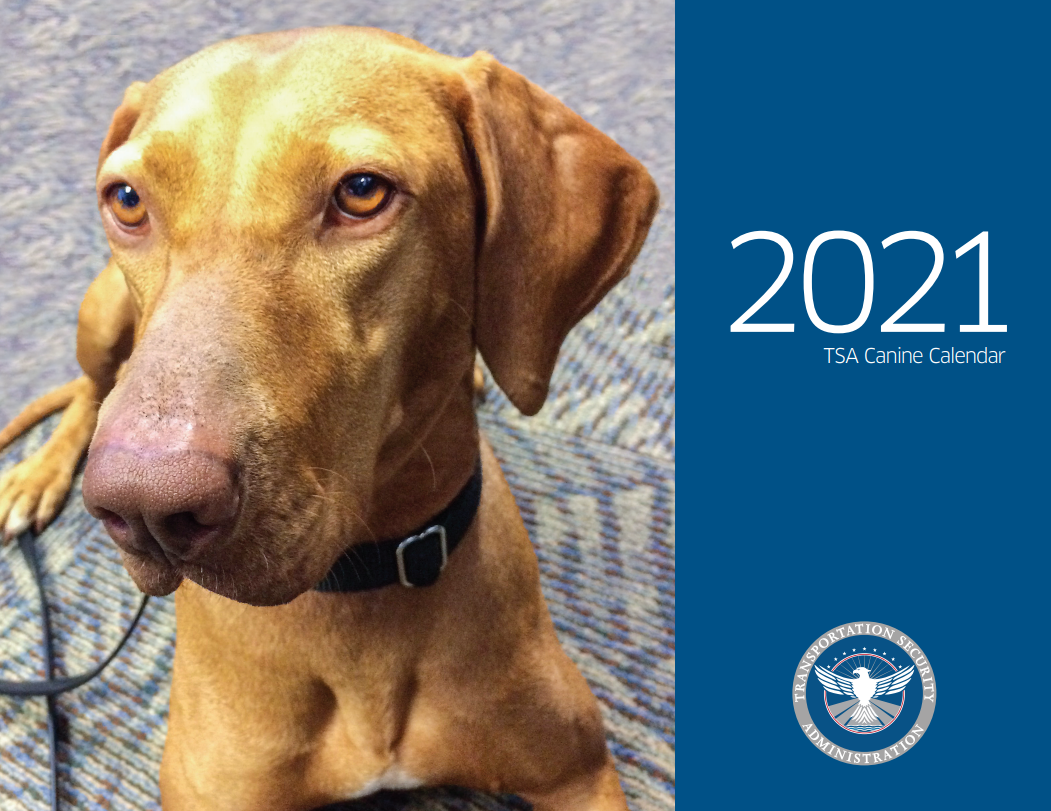 Cover of the TSA 2021 Canine Calendar featuring a blond hound