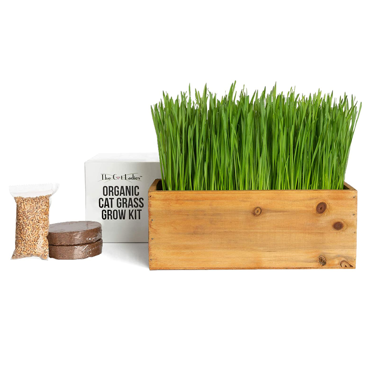 cat-organic-grass-kit-with-planter-seed-and-soil