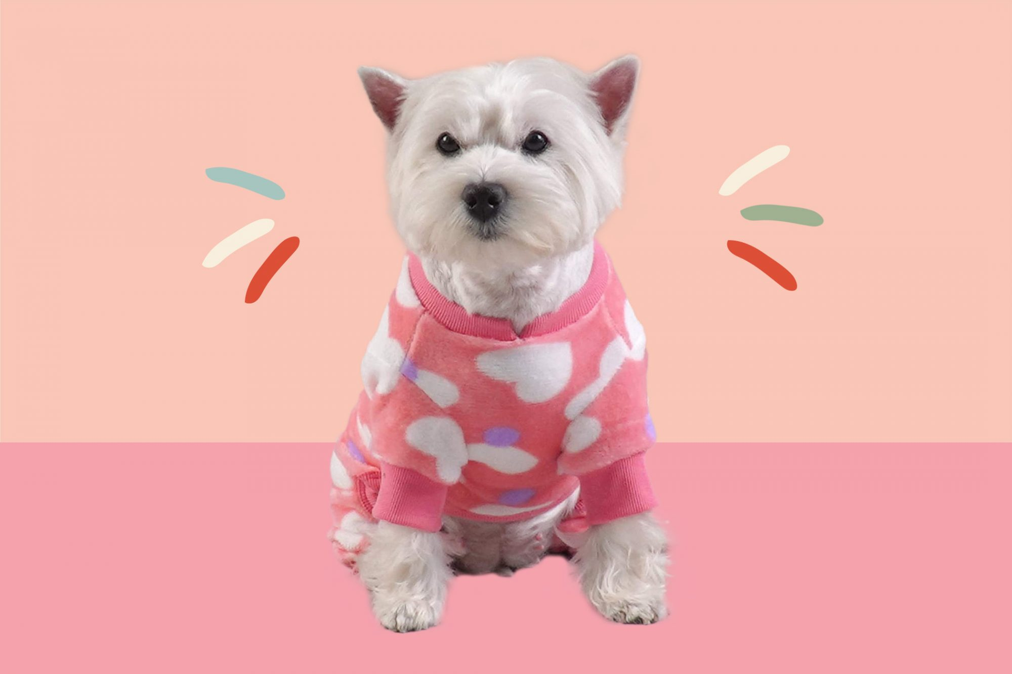 Small white dog in a pink sweater with white hearts