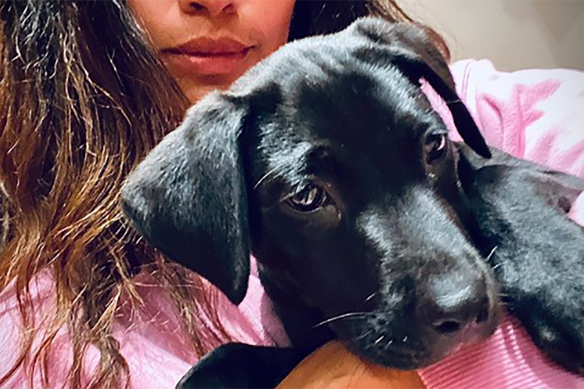 Matthew McConaughey's wife, Camila Alves, holding their new puppy