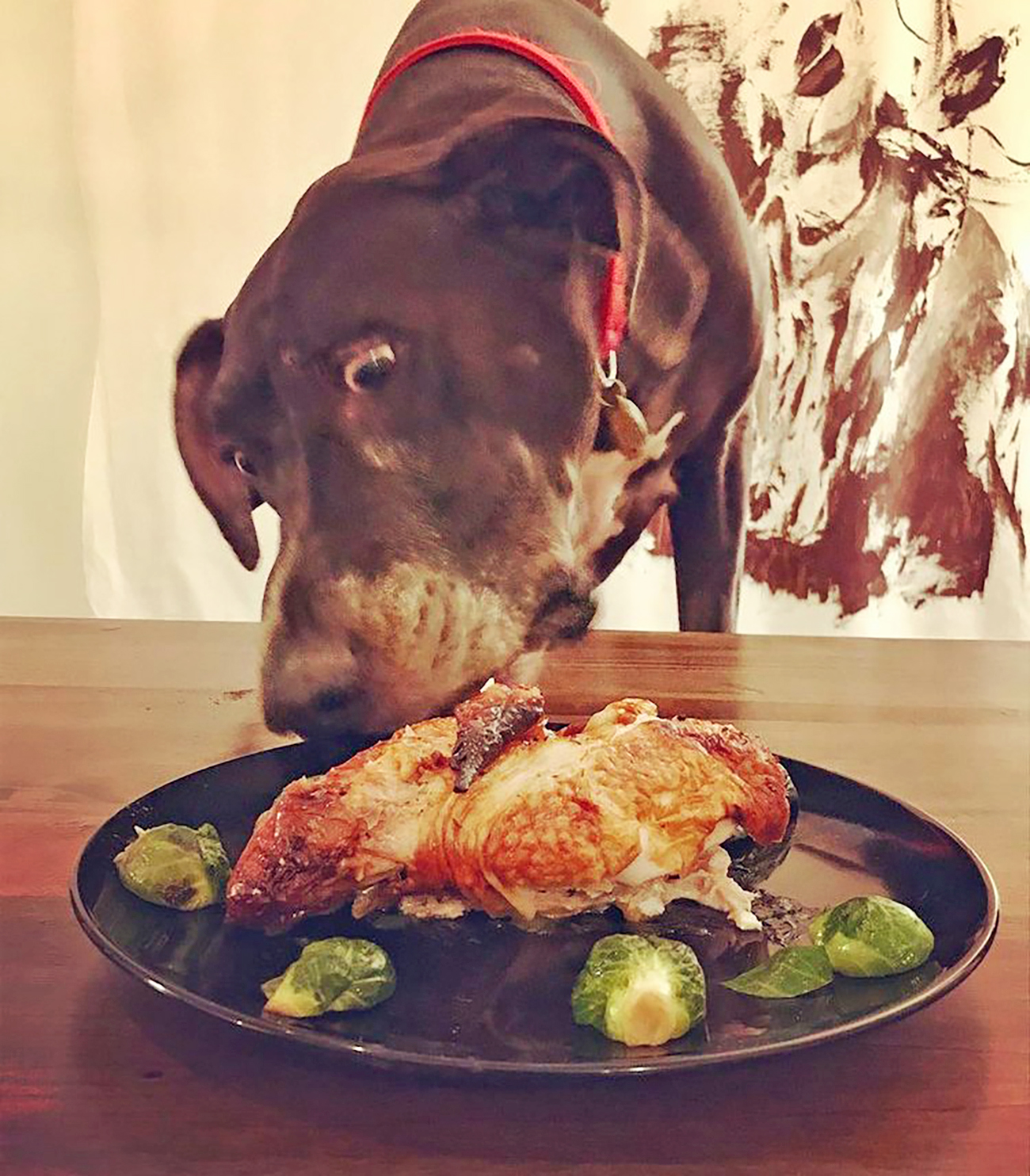 Large dog enjoying a chicken dish on a plate