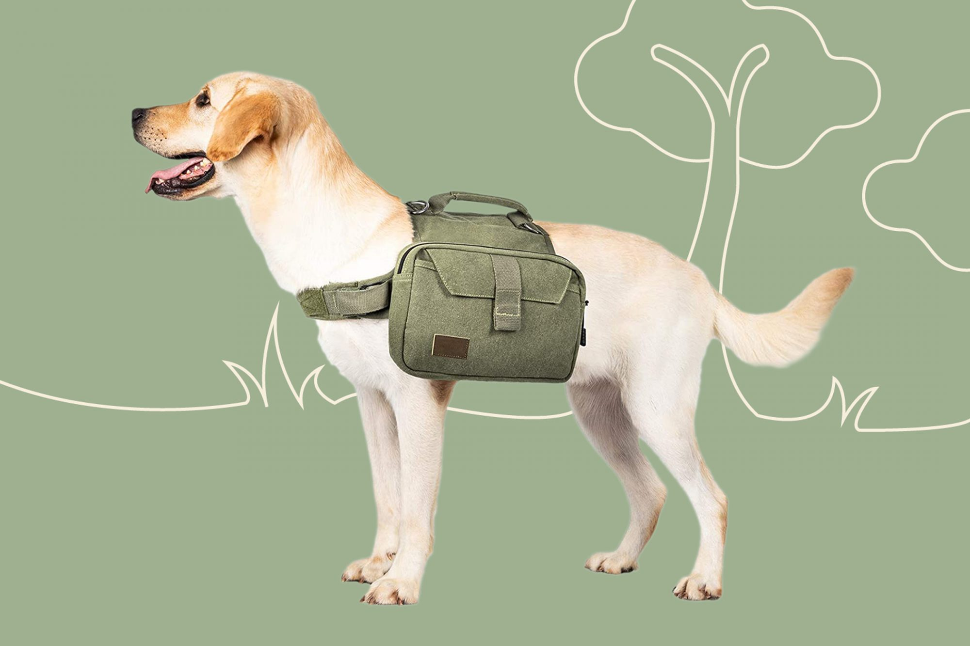 Yellow lab dog wears dog harness backpack